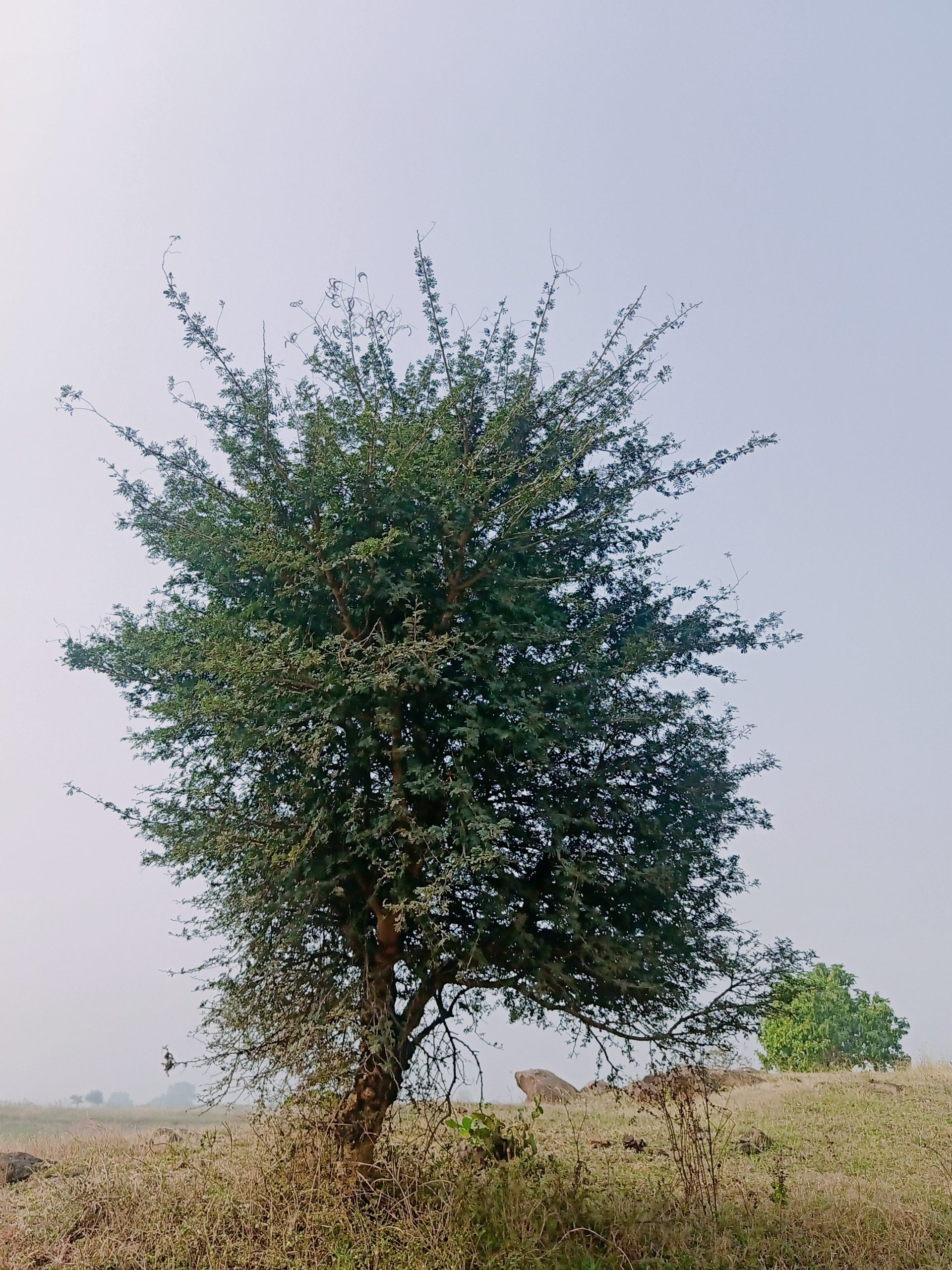 a growing tree