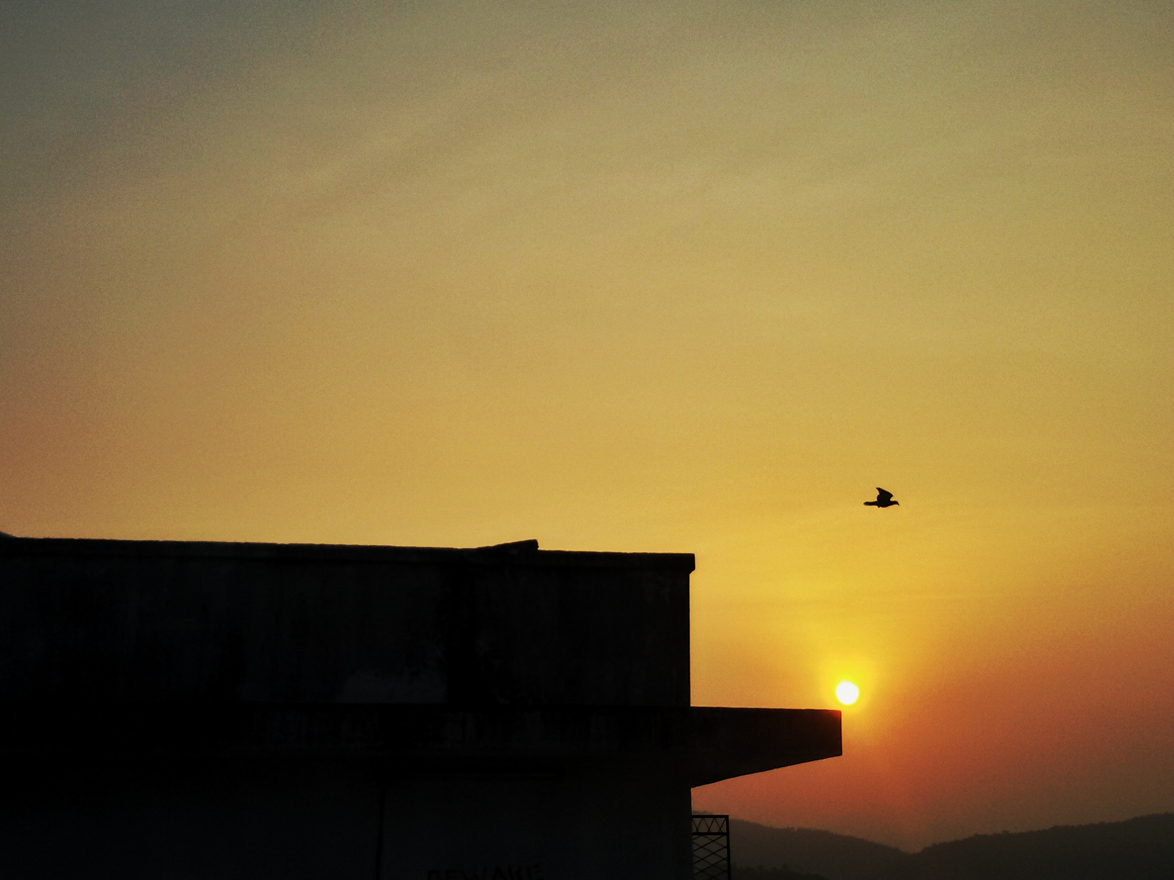 bird flying at the time of sunset
