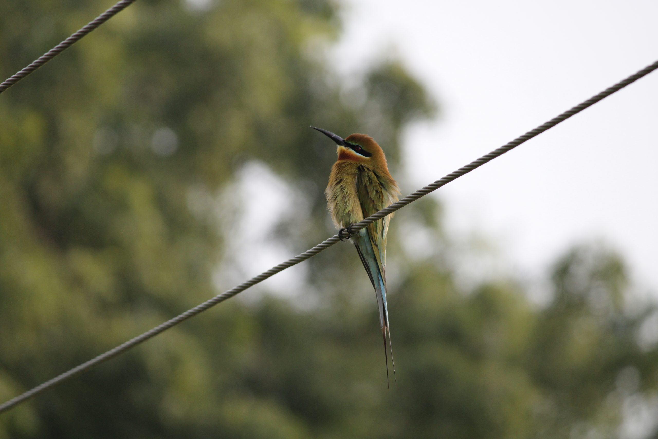 Bird sitting on a wire