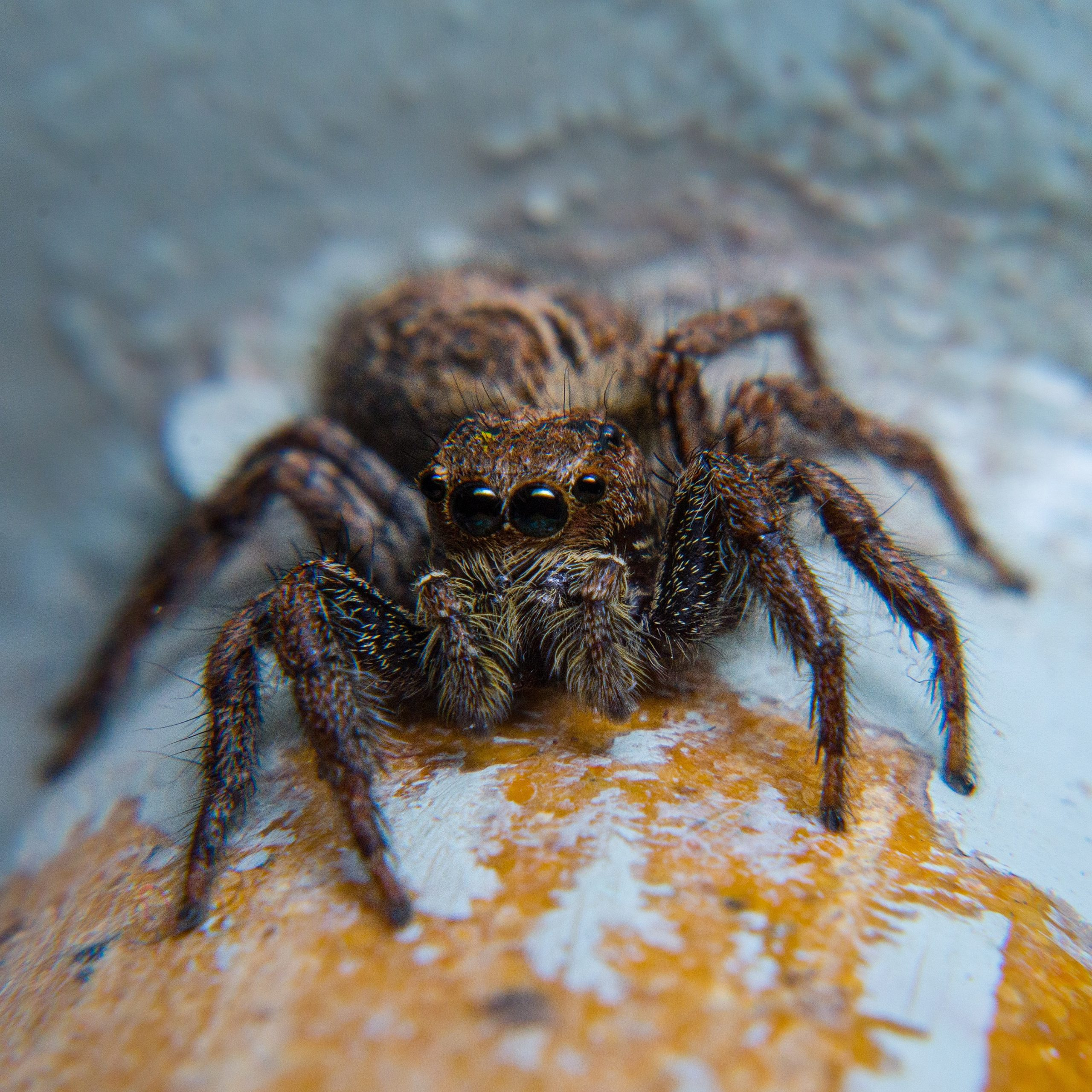 close-up of a spider