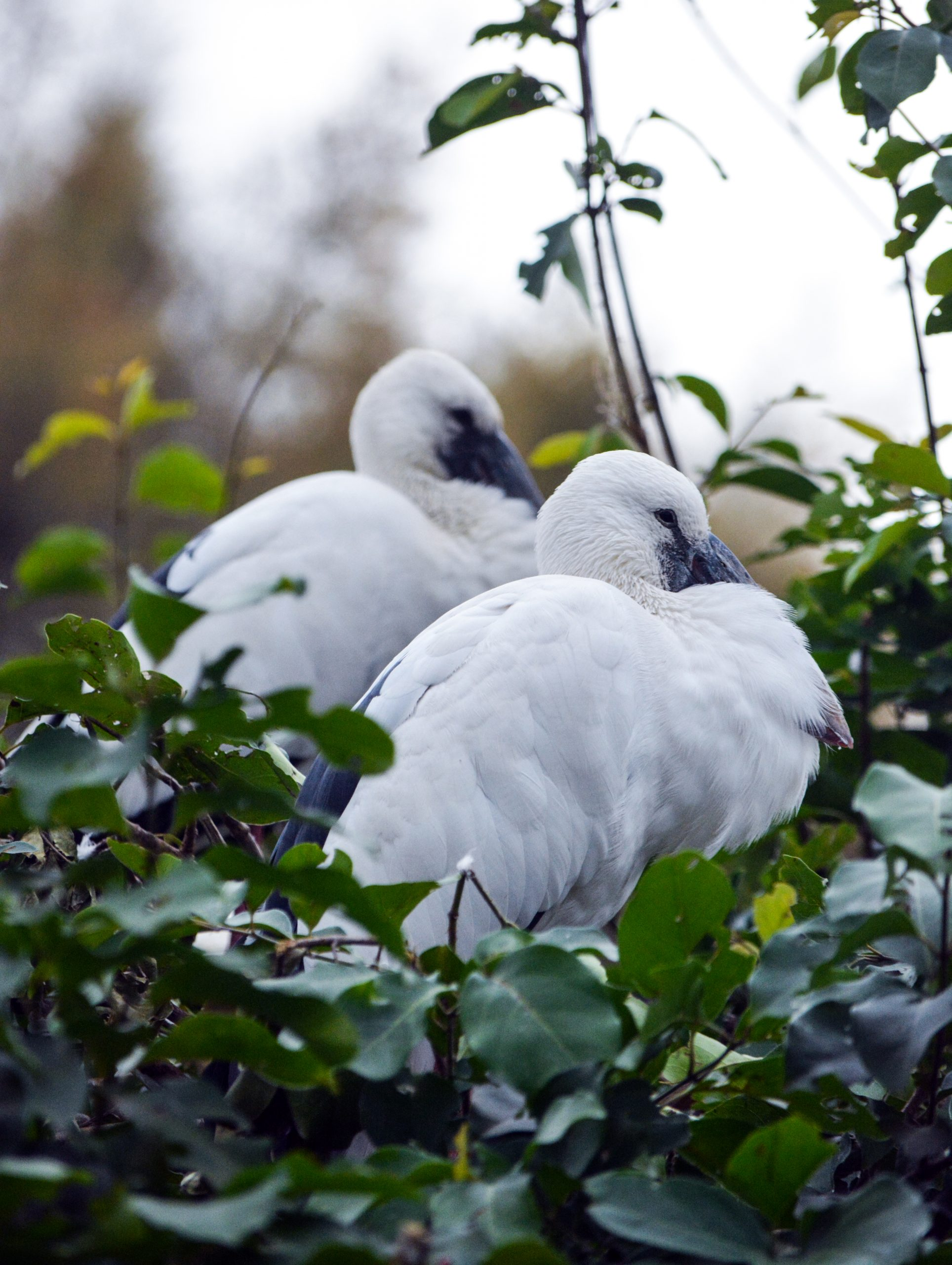 birds sitting in a park
