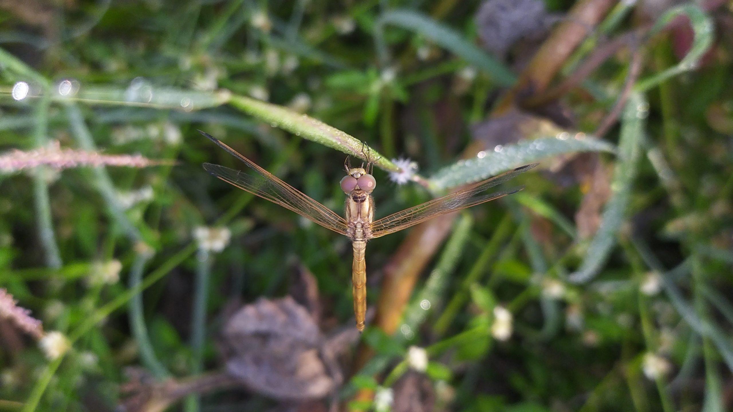 dragonfly on a stem