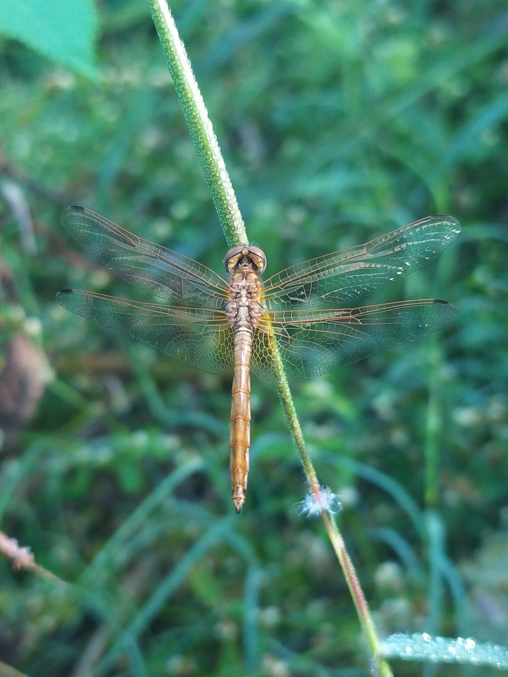 Dragonfly on plant stem