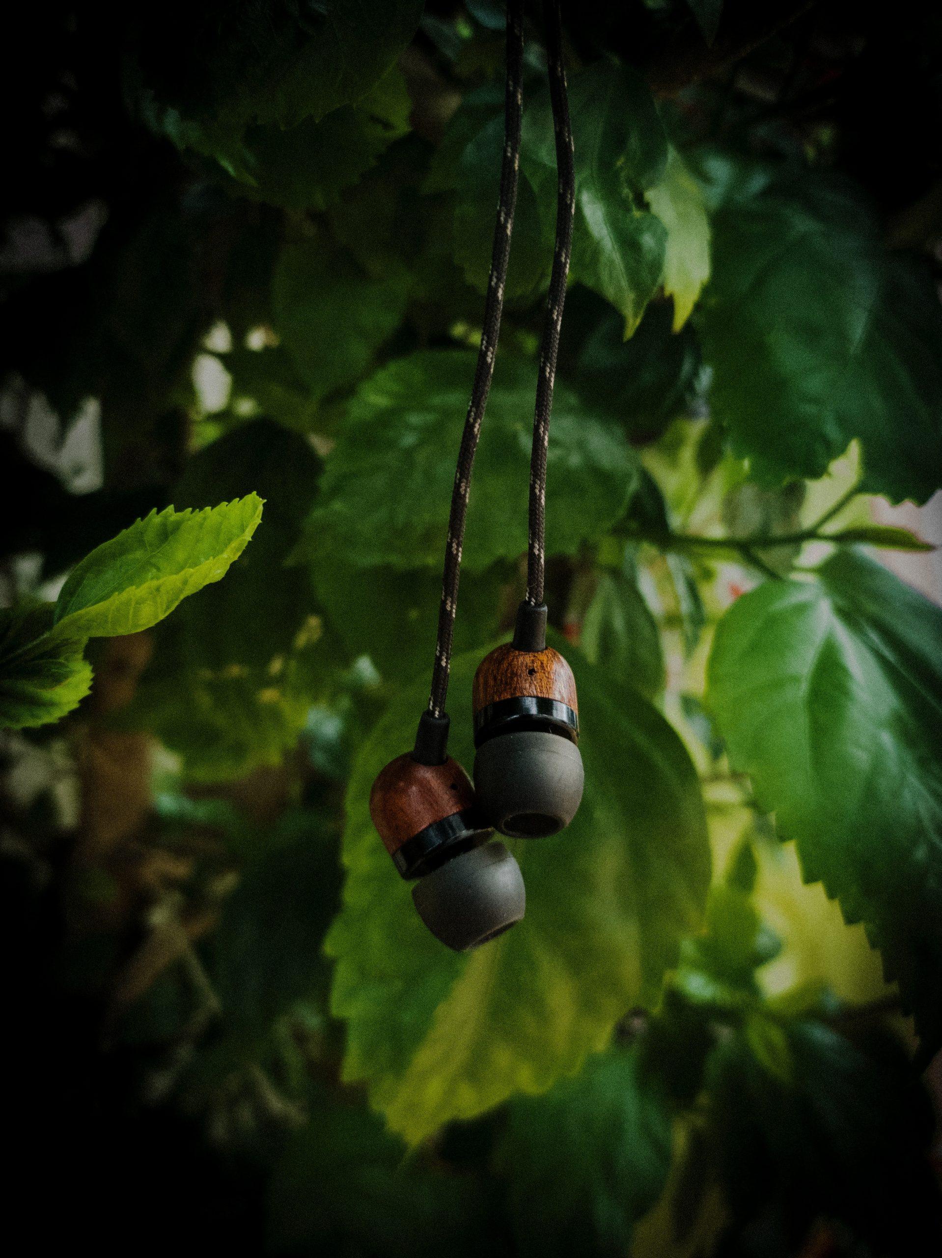 earphones hanging on a tree