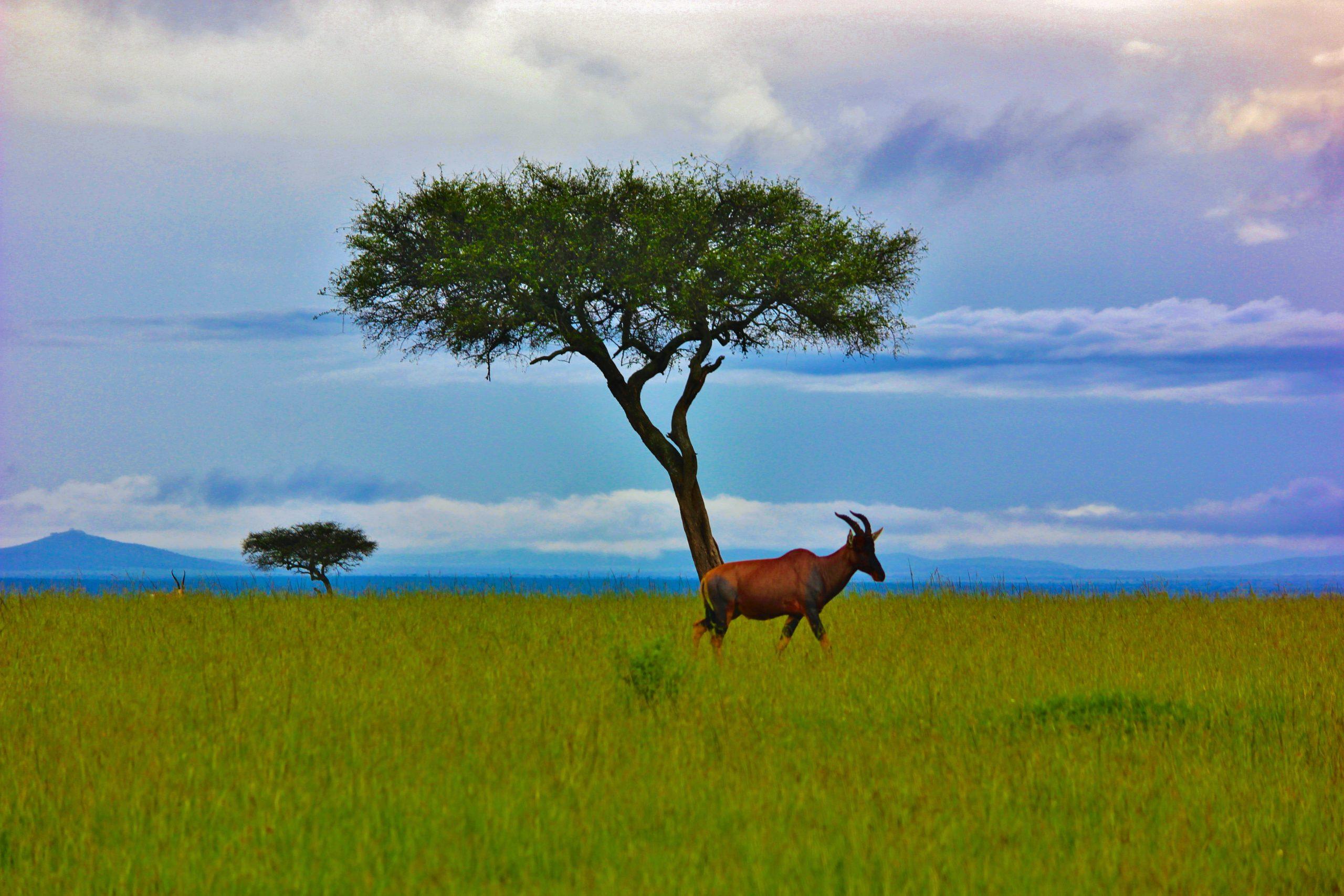 grassland and wilderness