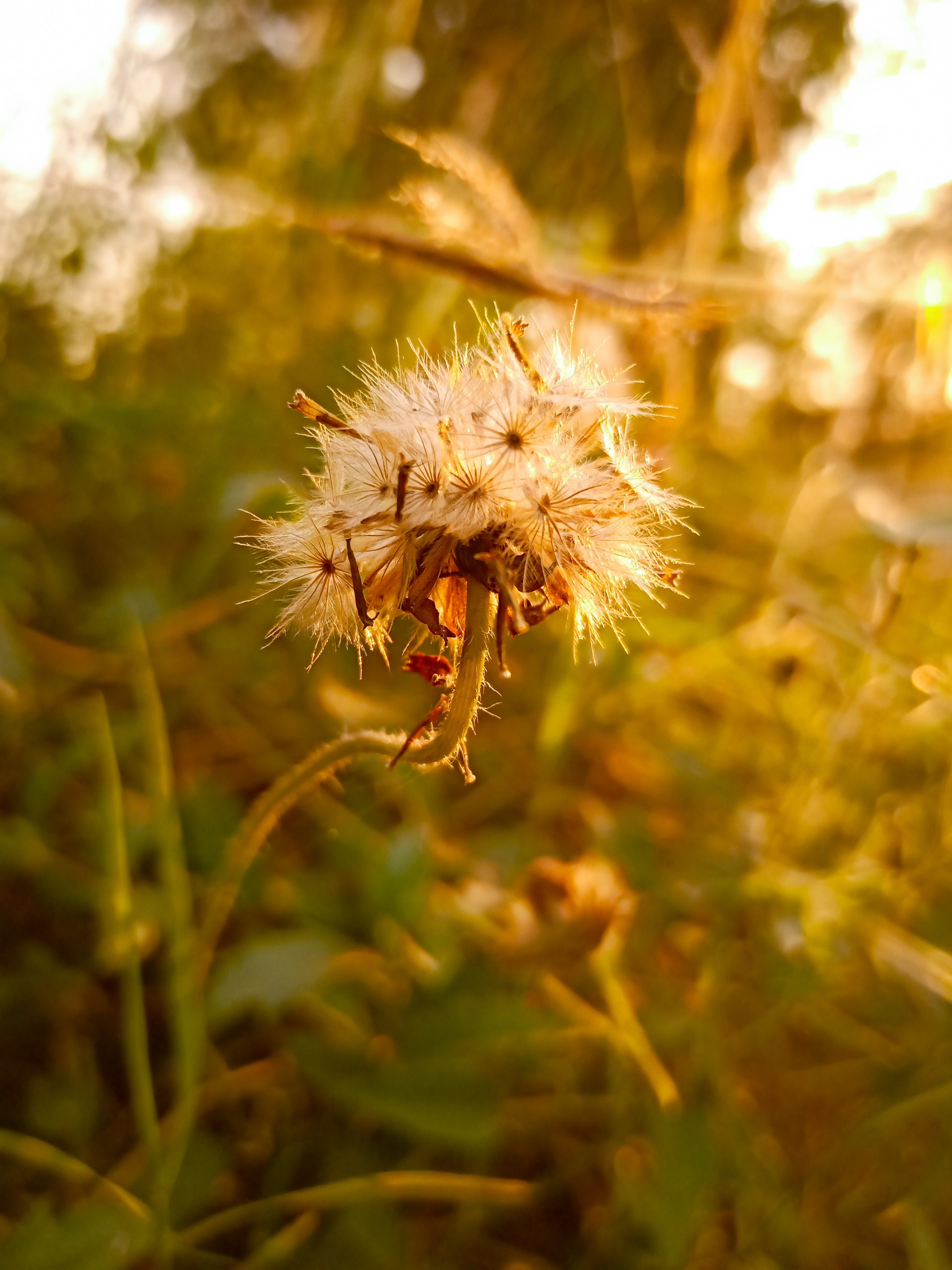 Sunlight on flower