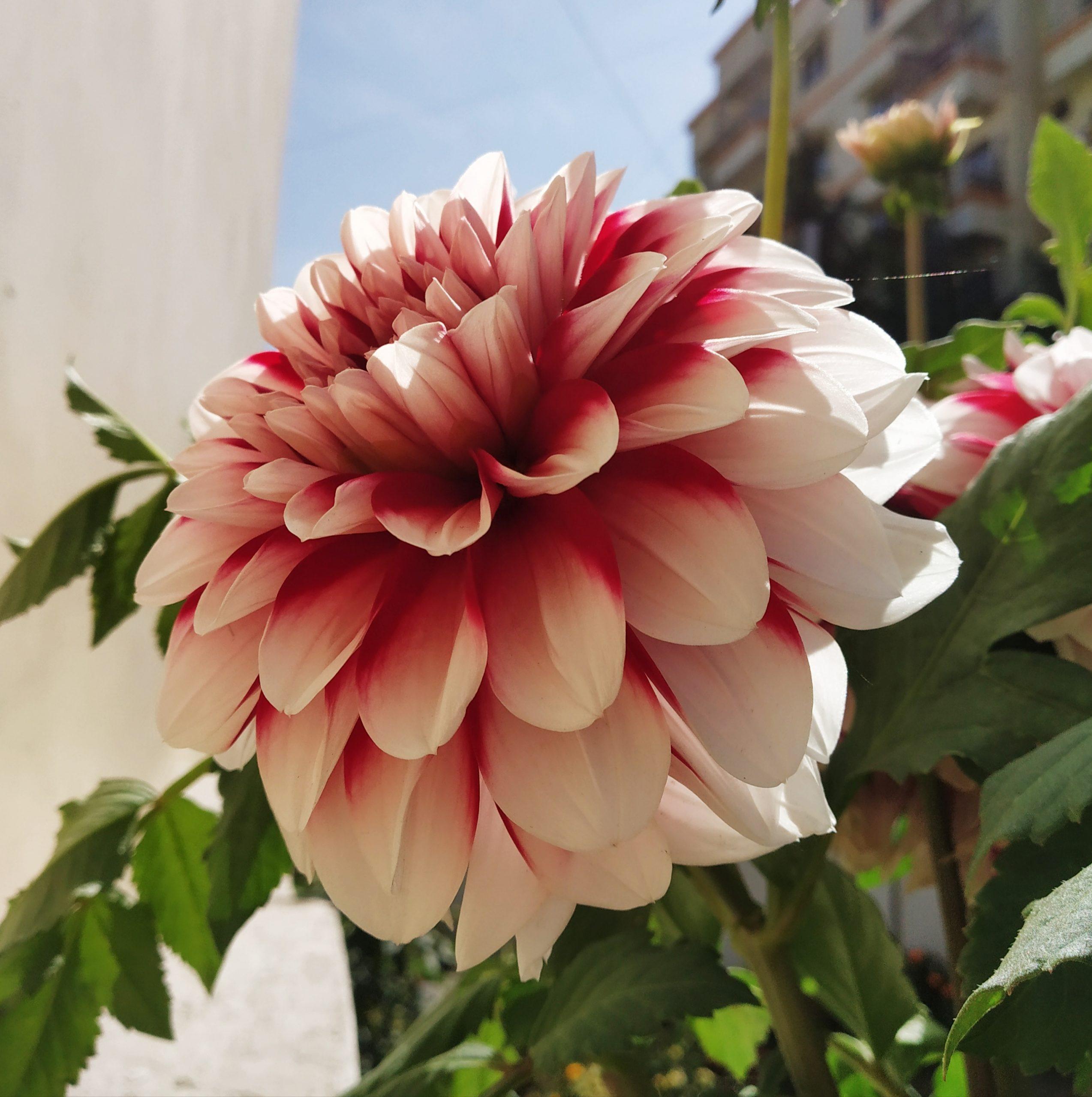 Shaded flower