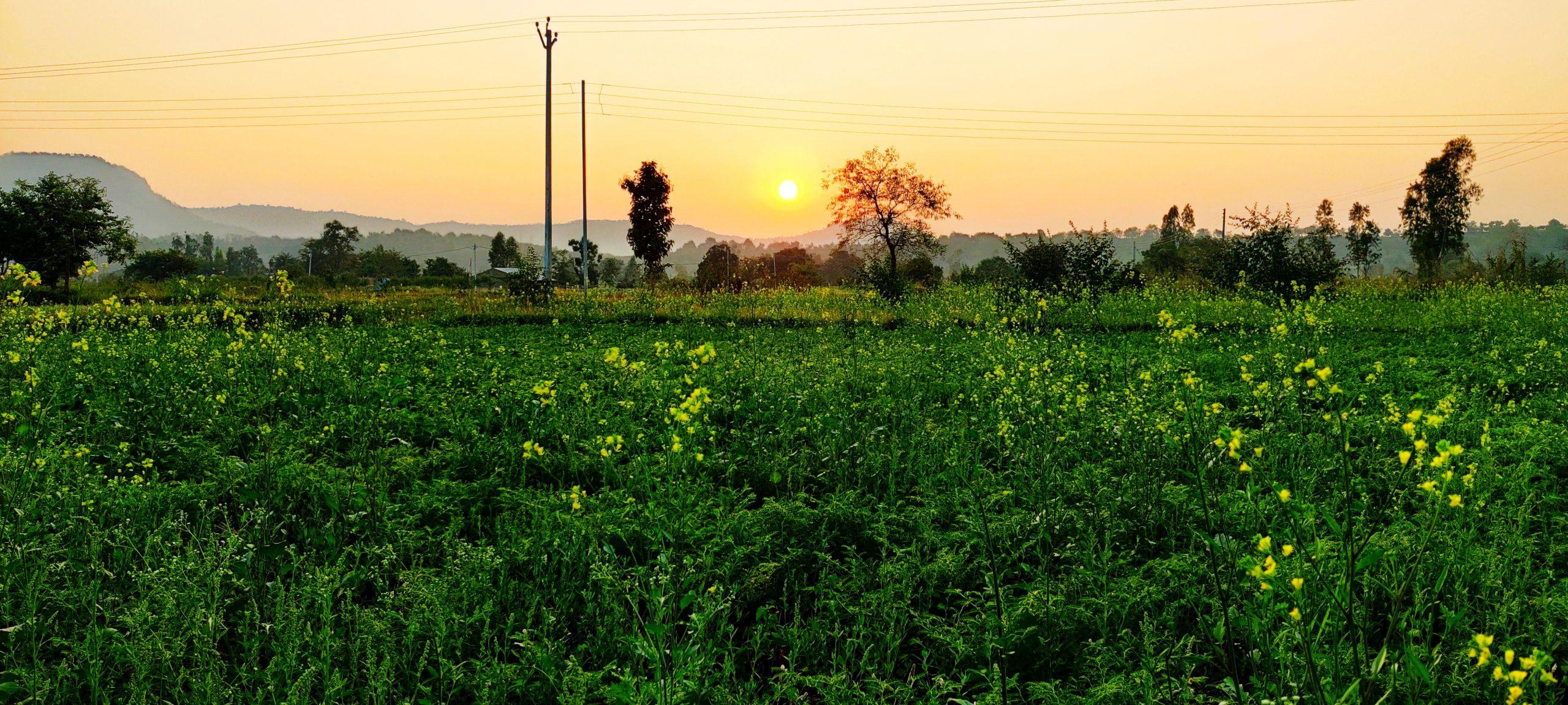 sunset near a garden