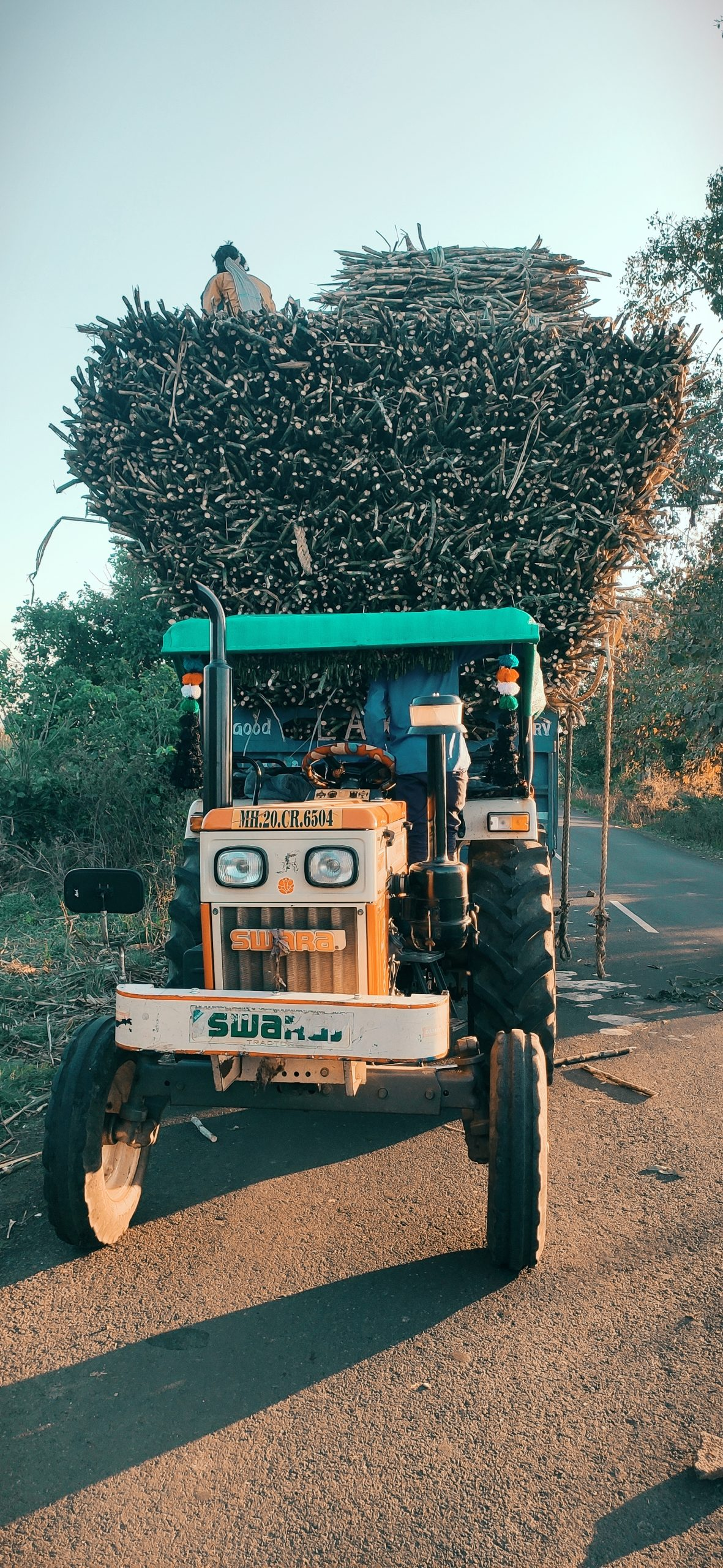 Tractor carrying sugarcanes