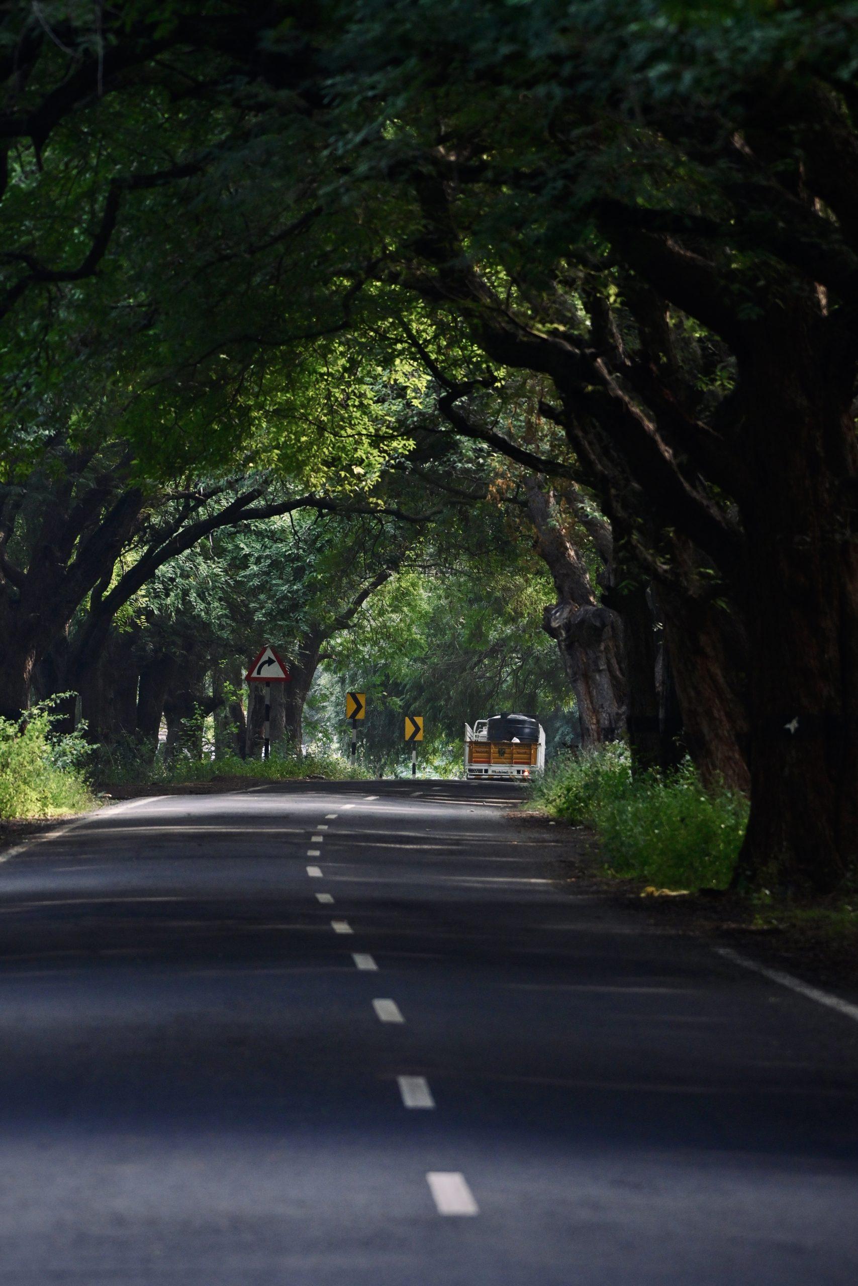 trees alongside road
