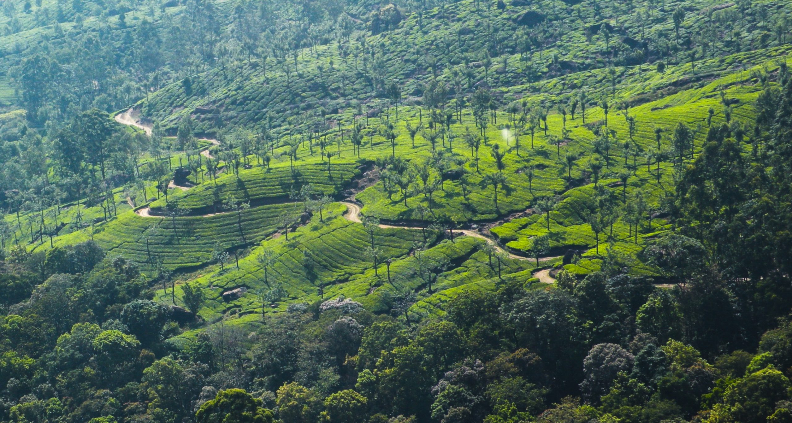 vegetation on hills