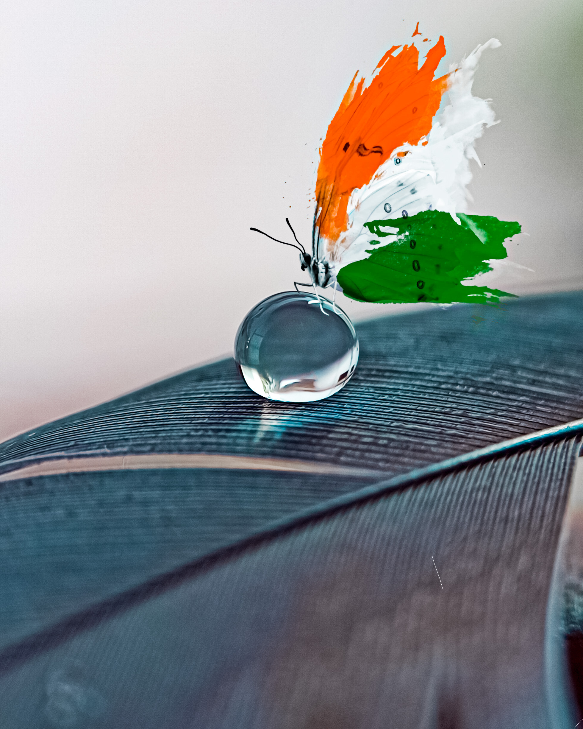water drop on leaf and mosquito with flag color wings on it