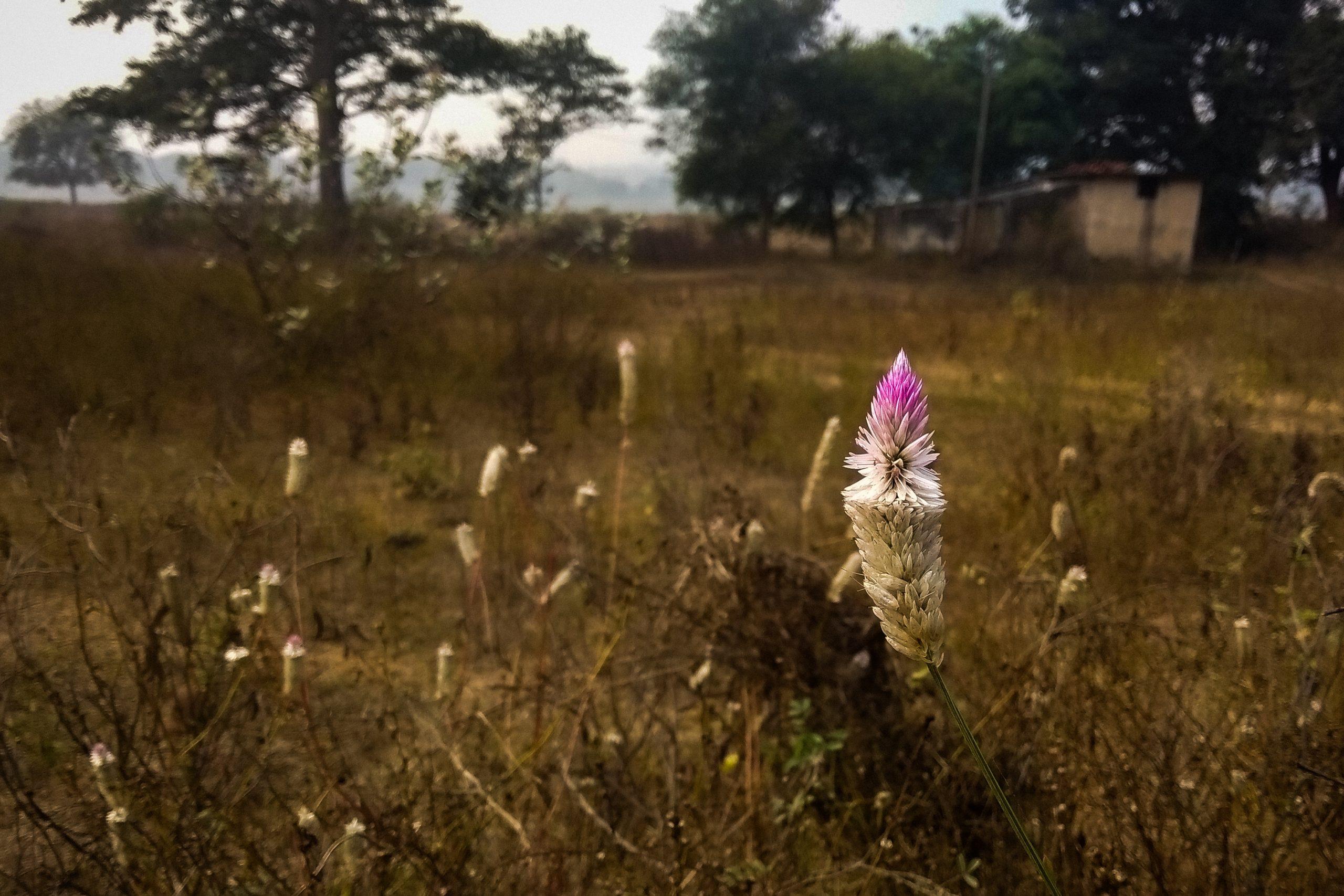 wildflowers and grassland