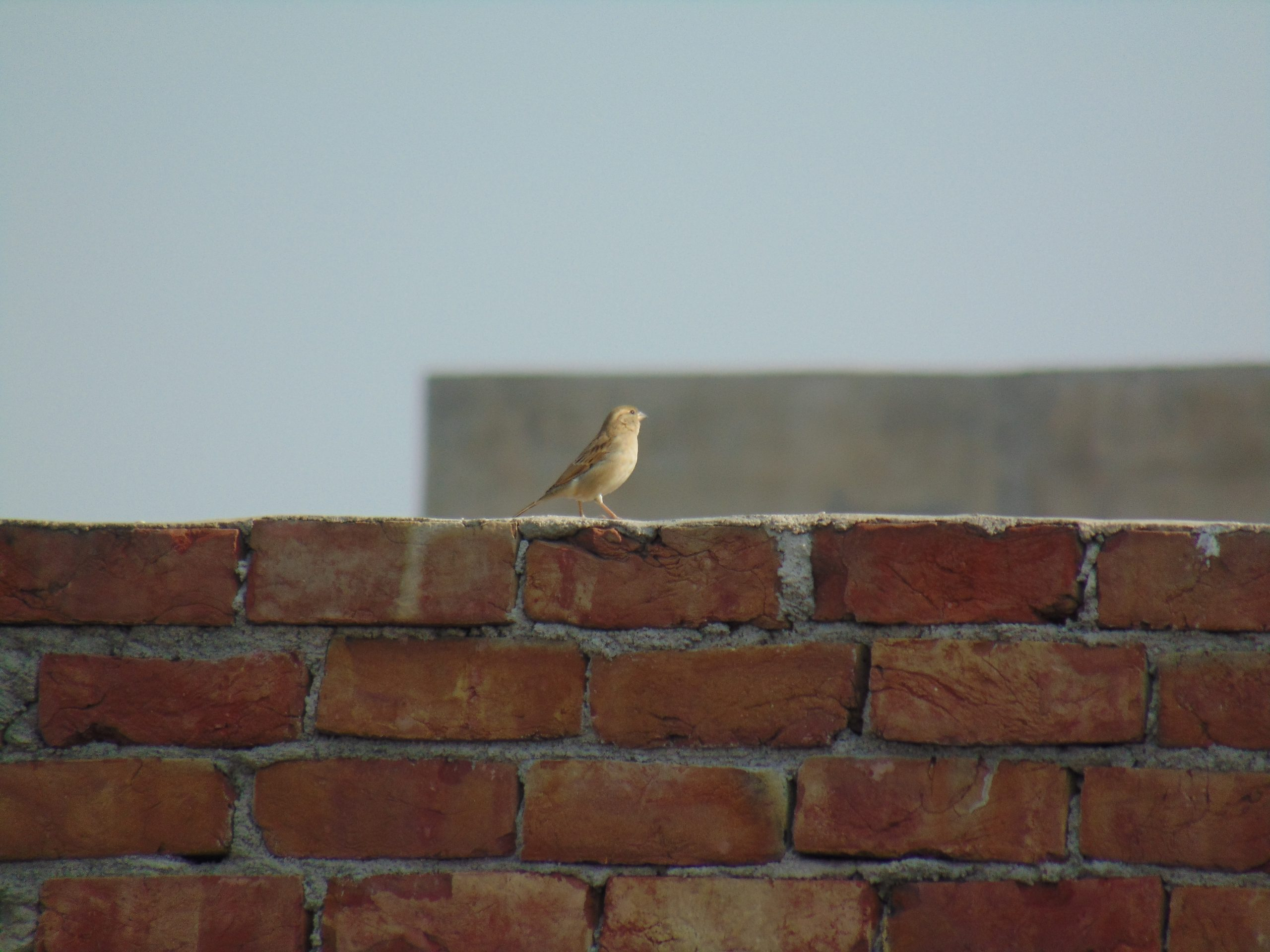 A bird on brick wall