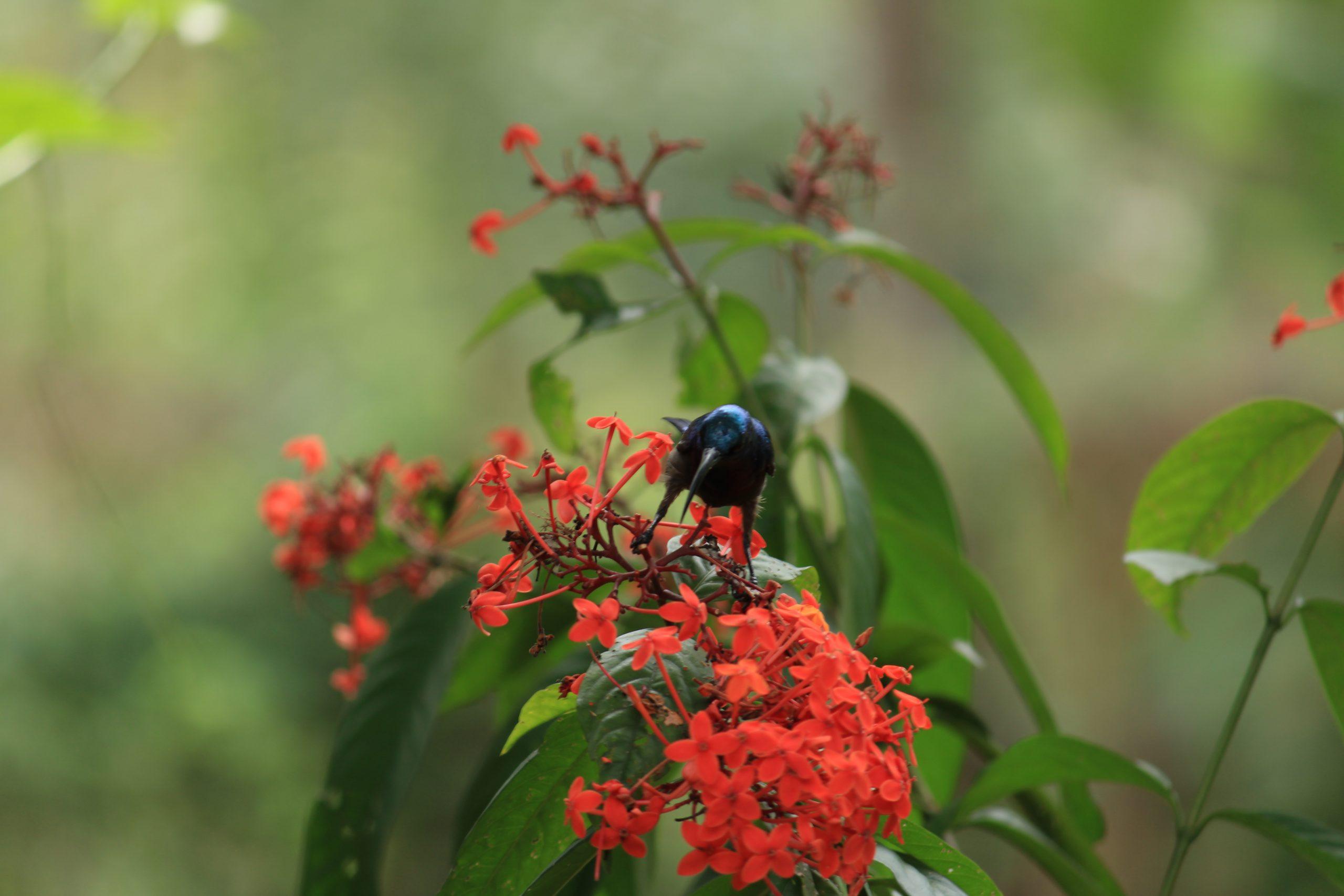 Bird sitting on the flower