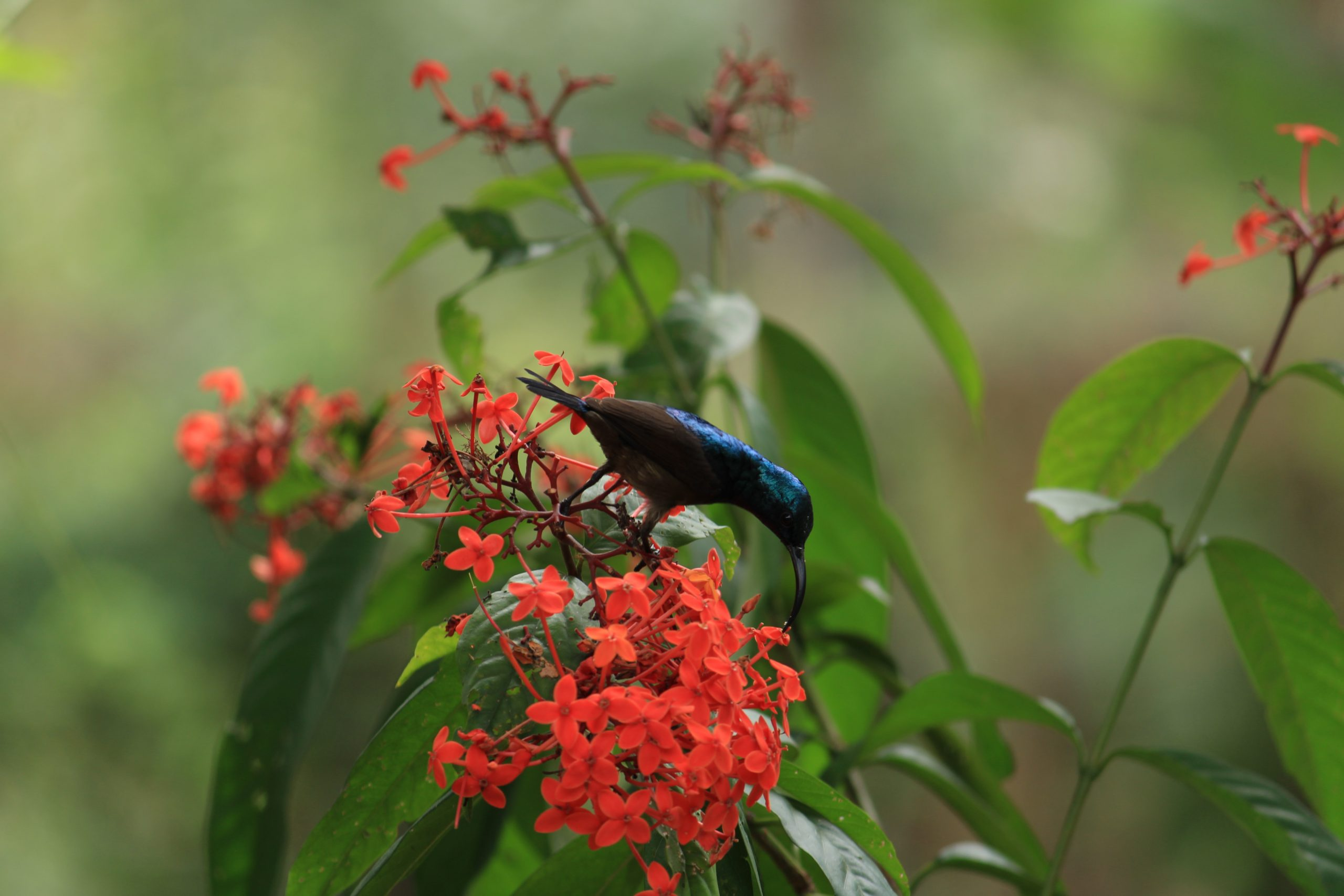 A bird sitting on flower