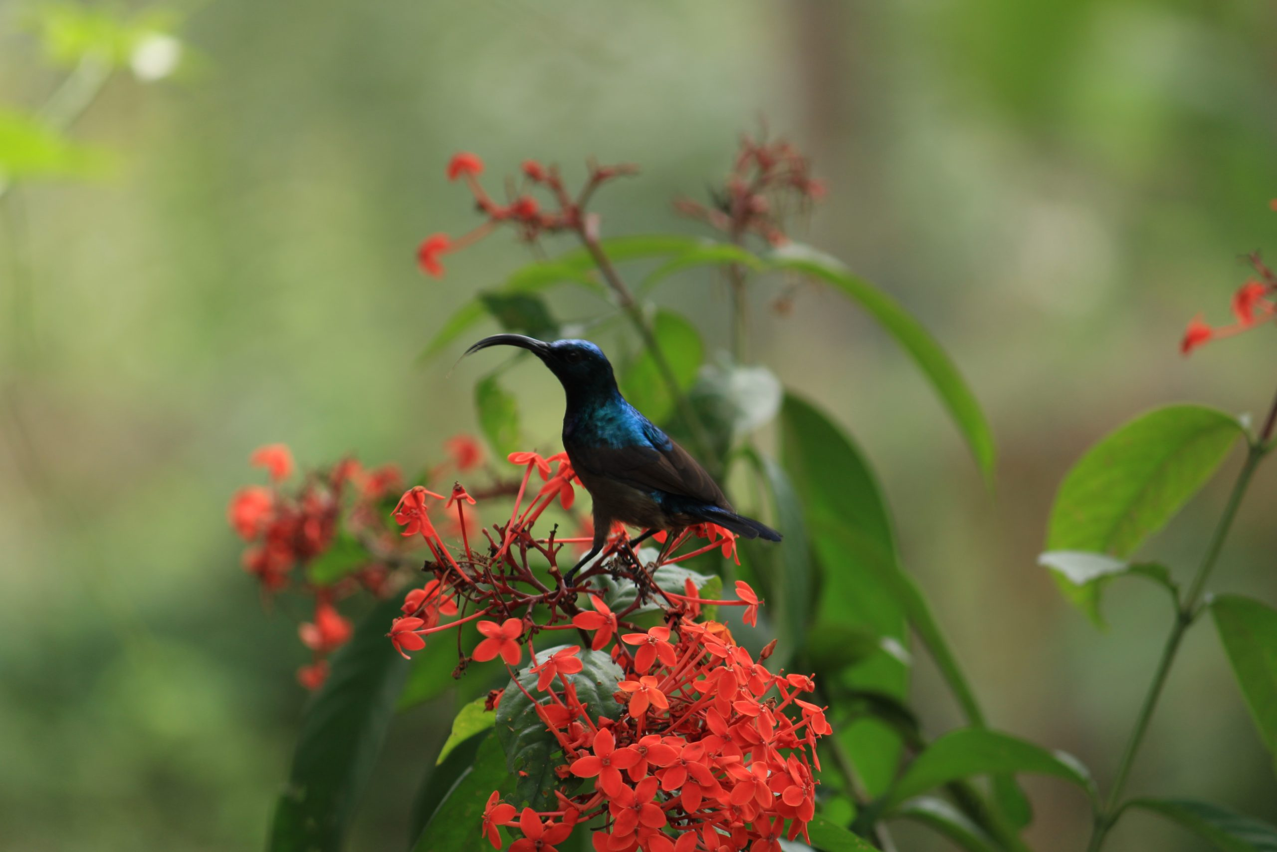 A bird sitting on the flower