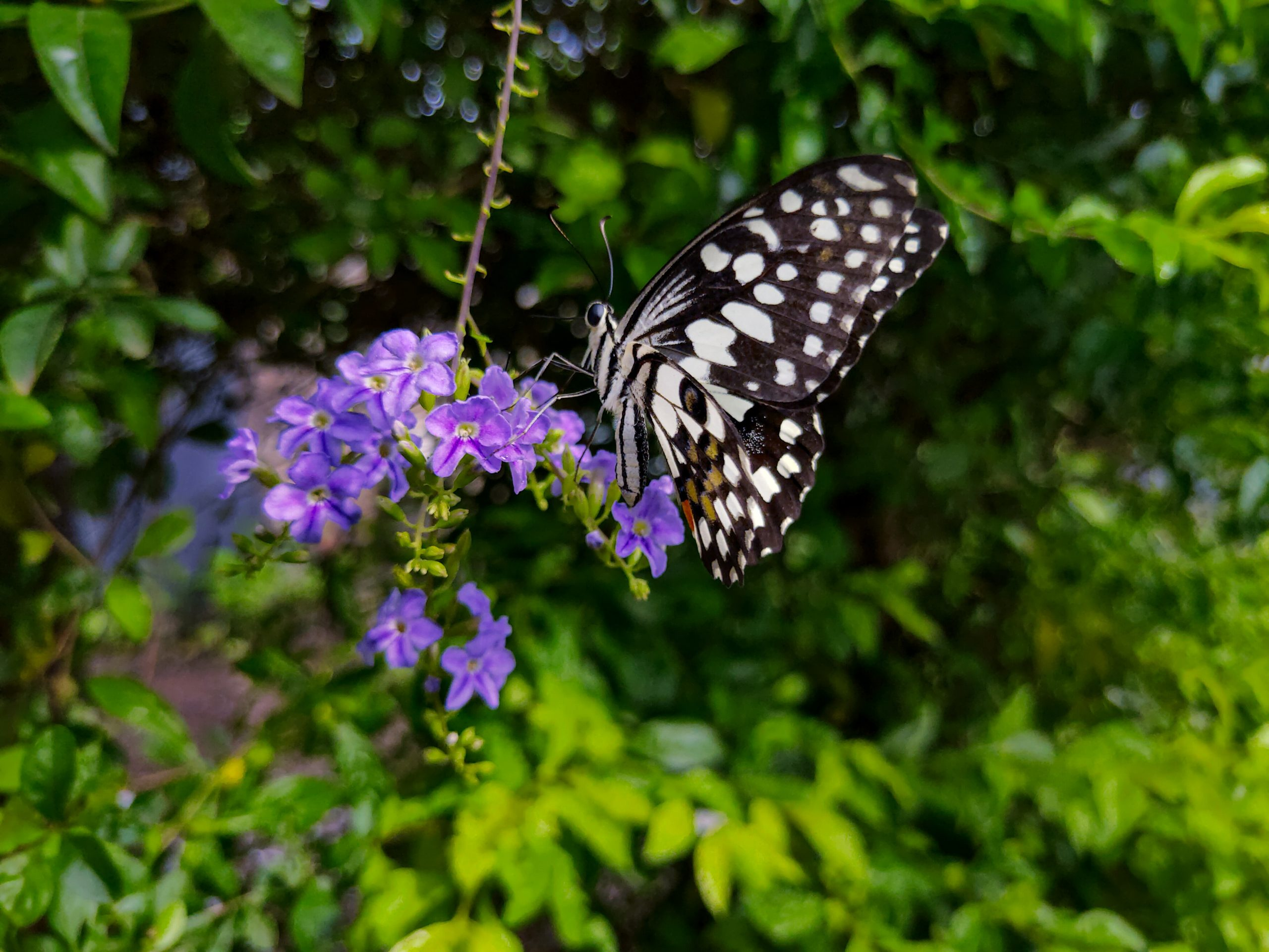 A butterfly on a bunch of flowers