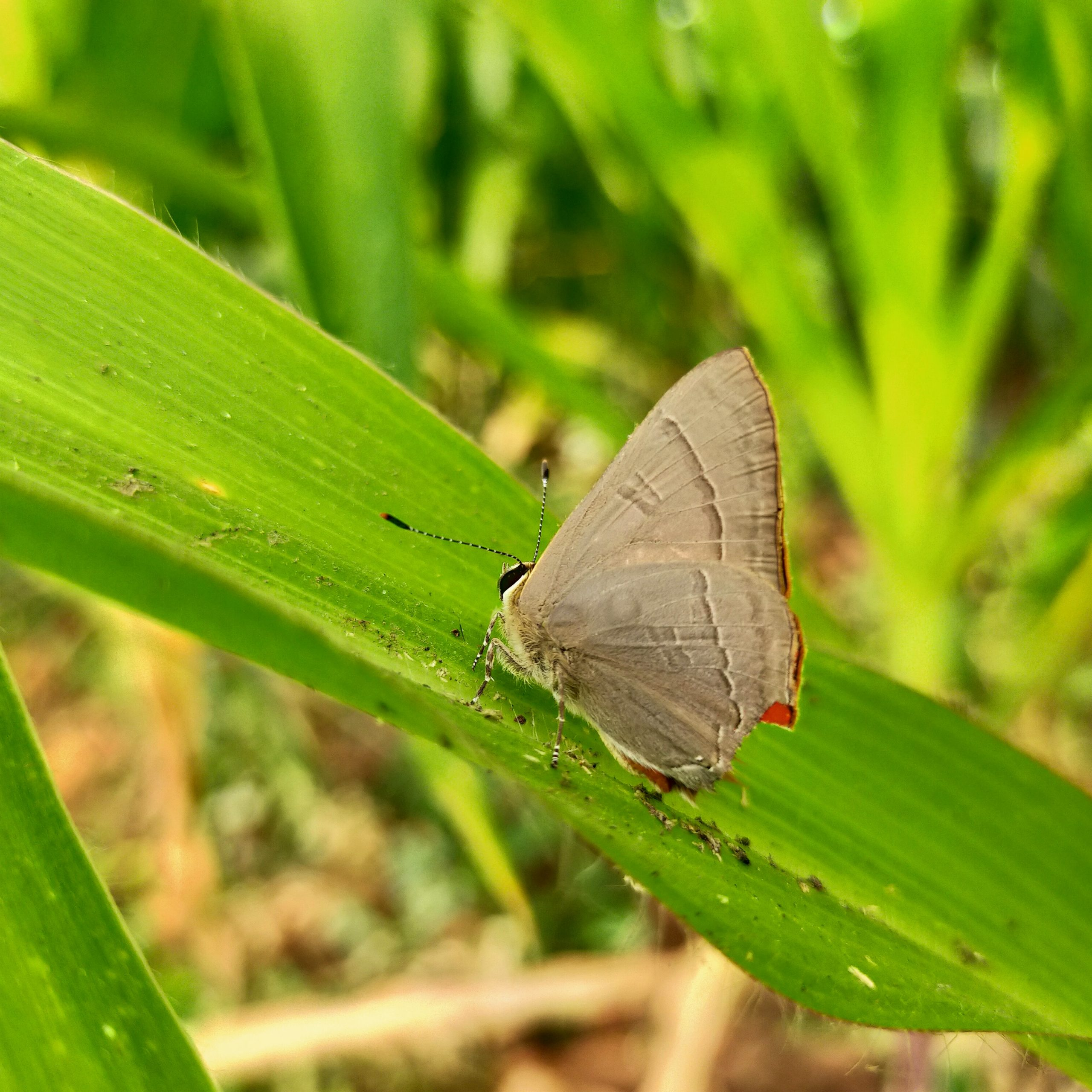 A butterfly on a green leaf