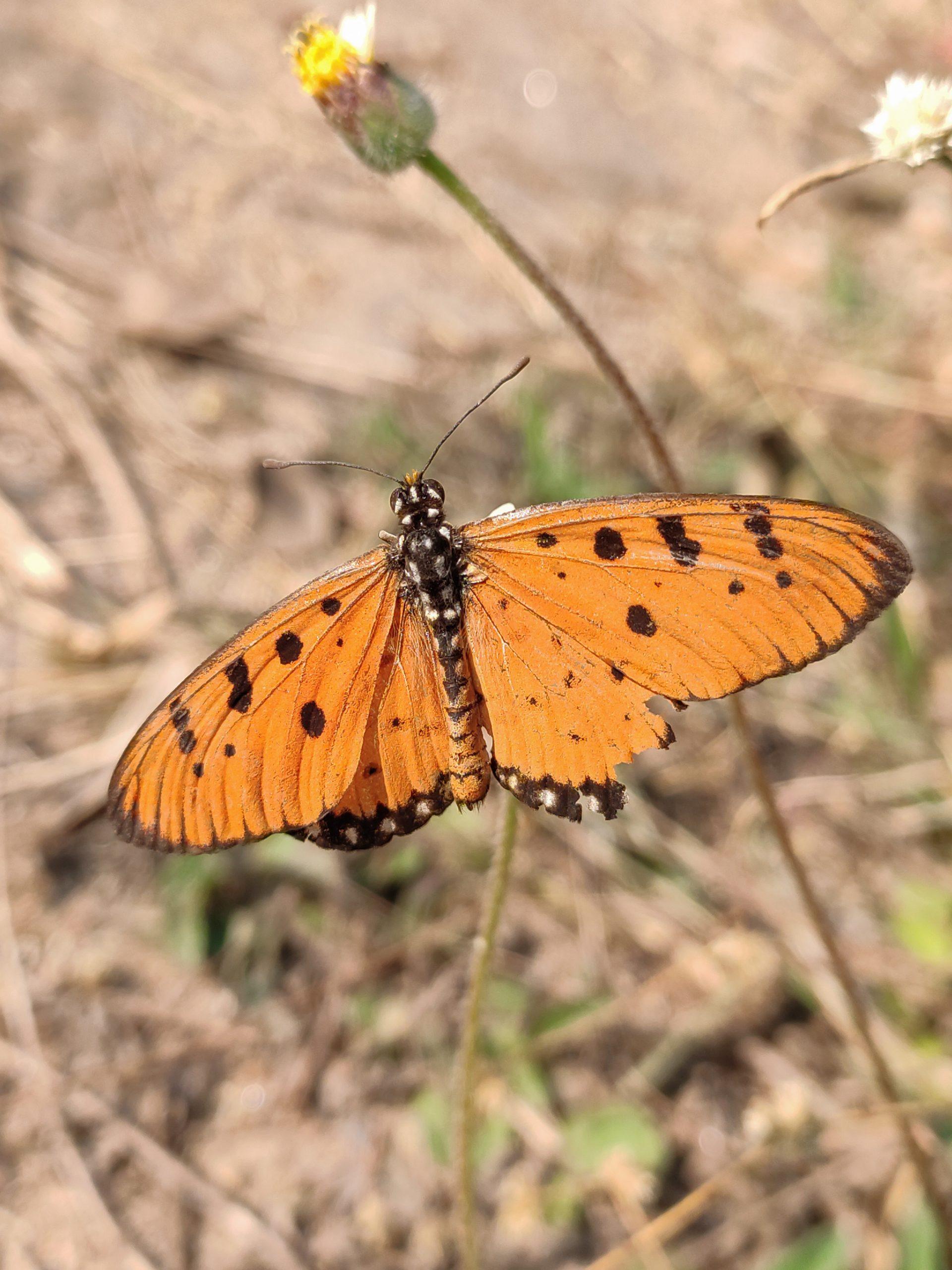 A butterfly on flower bud