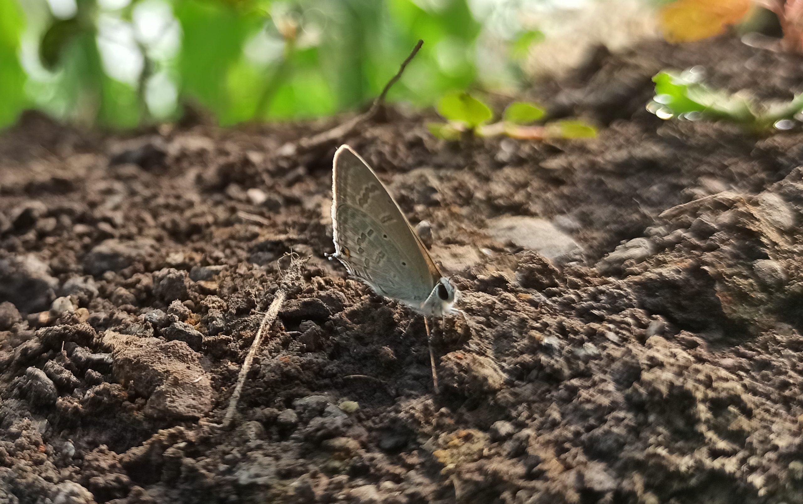 A butterfly on soil