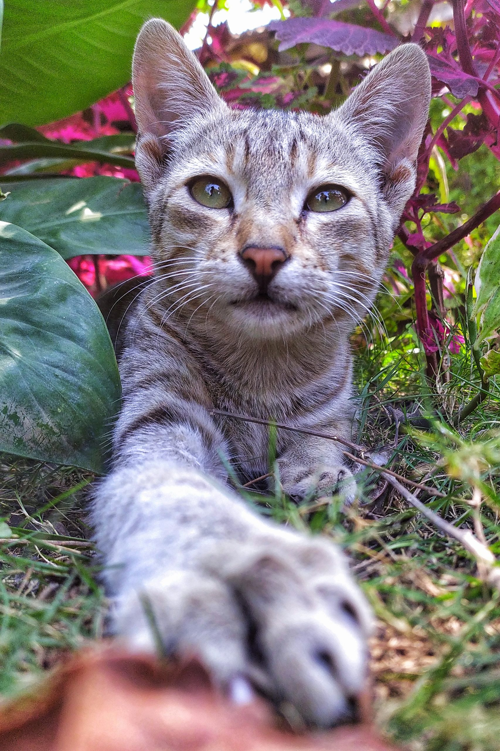 A cat in garden