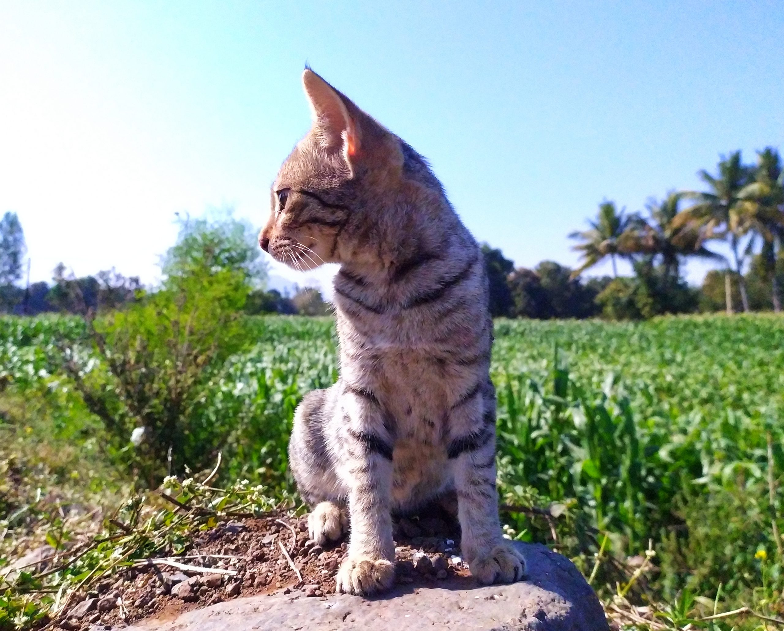 A cat sitting on the rock in farm