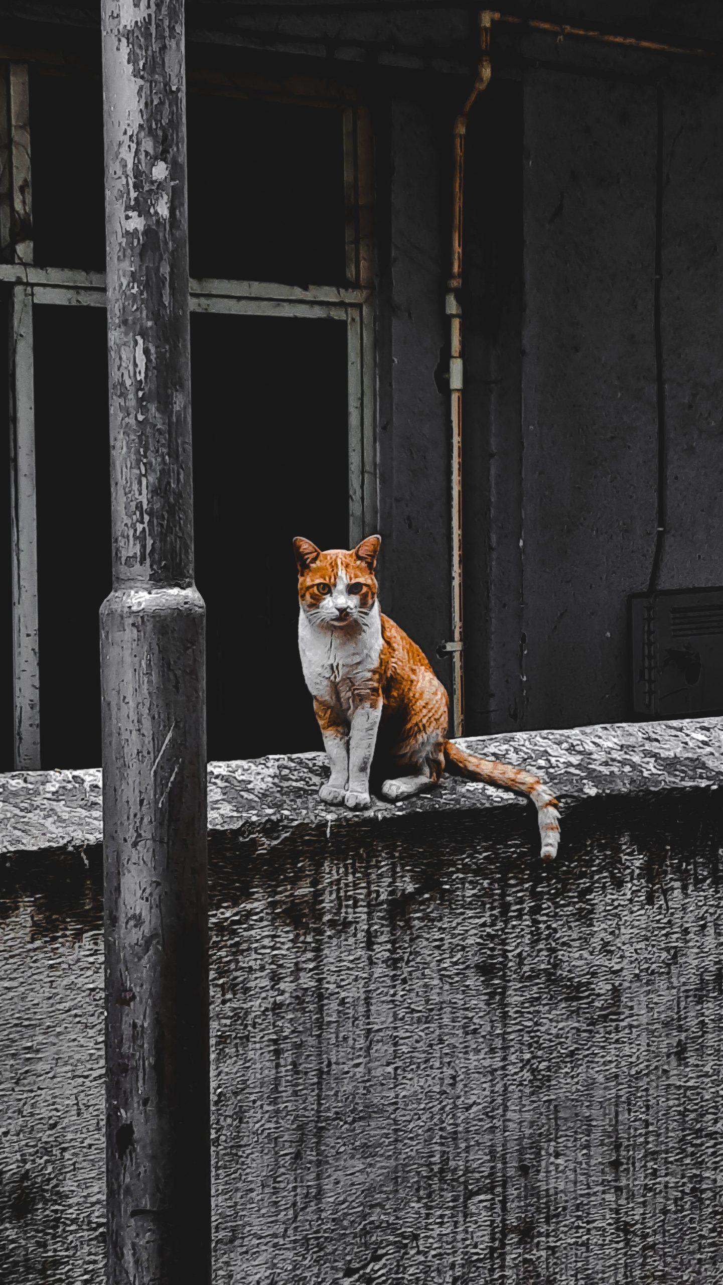 Cat sitting on wall