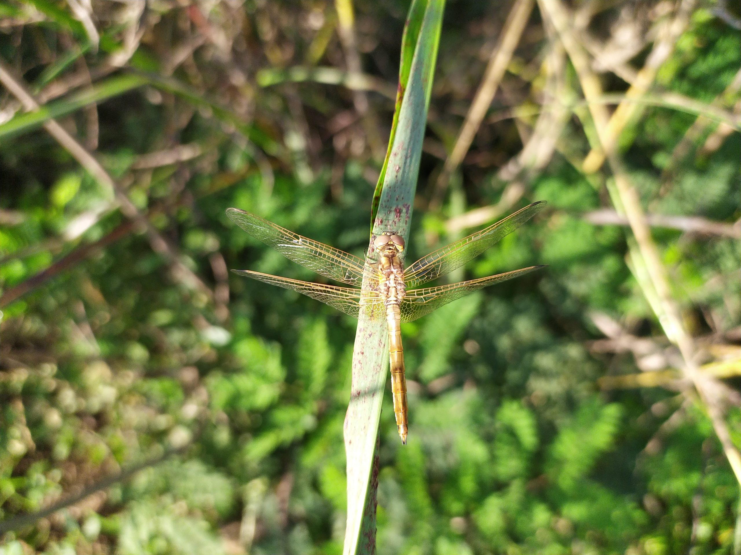 A dragon fly on grass