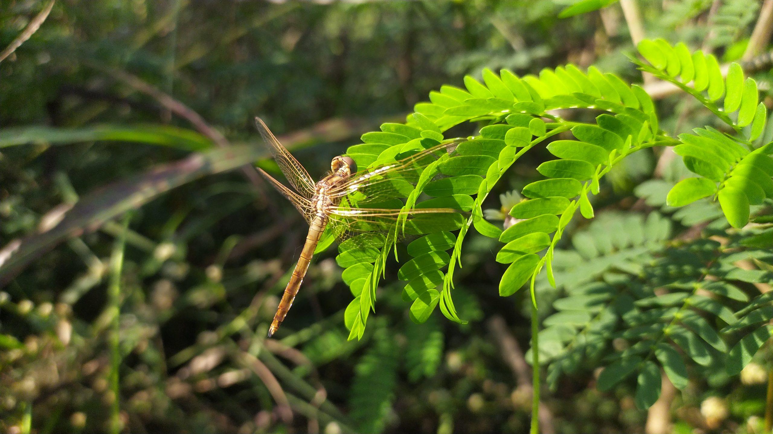 A dragon fly on plant leaf