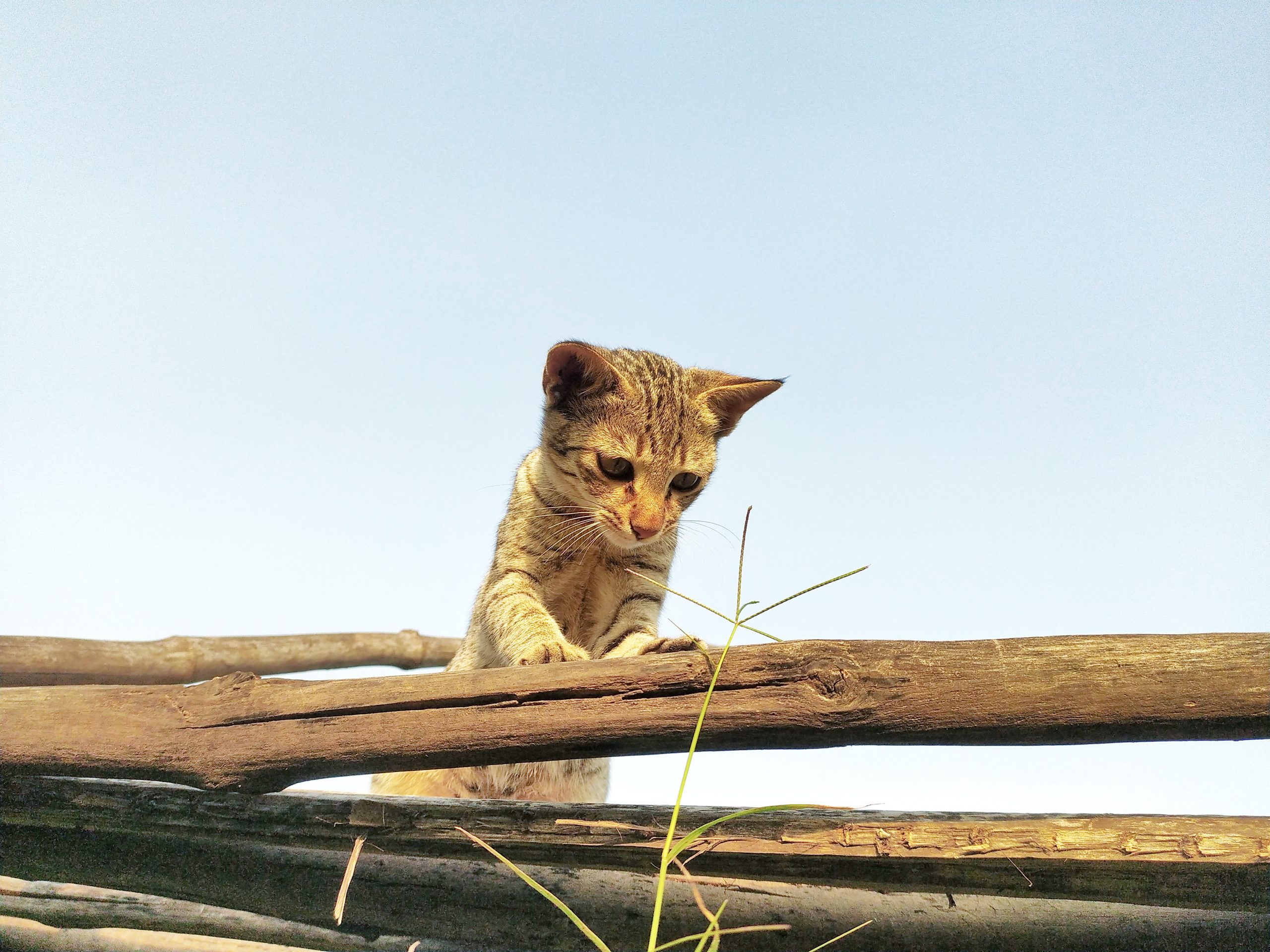 A little kitten on wooden logs