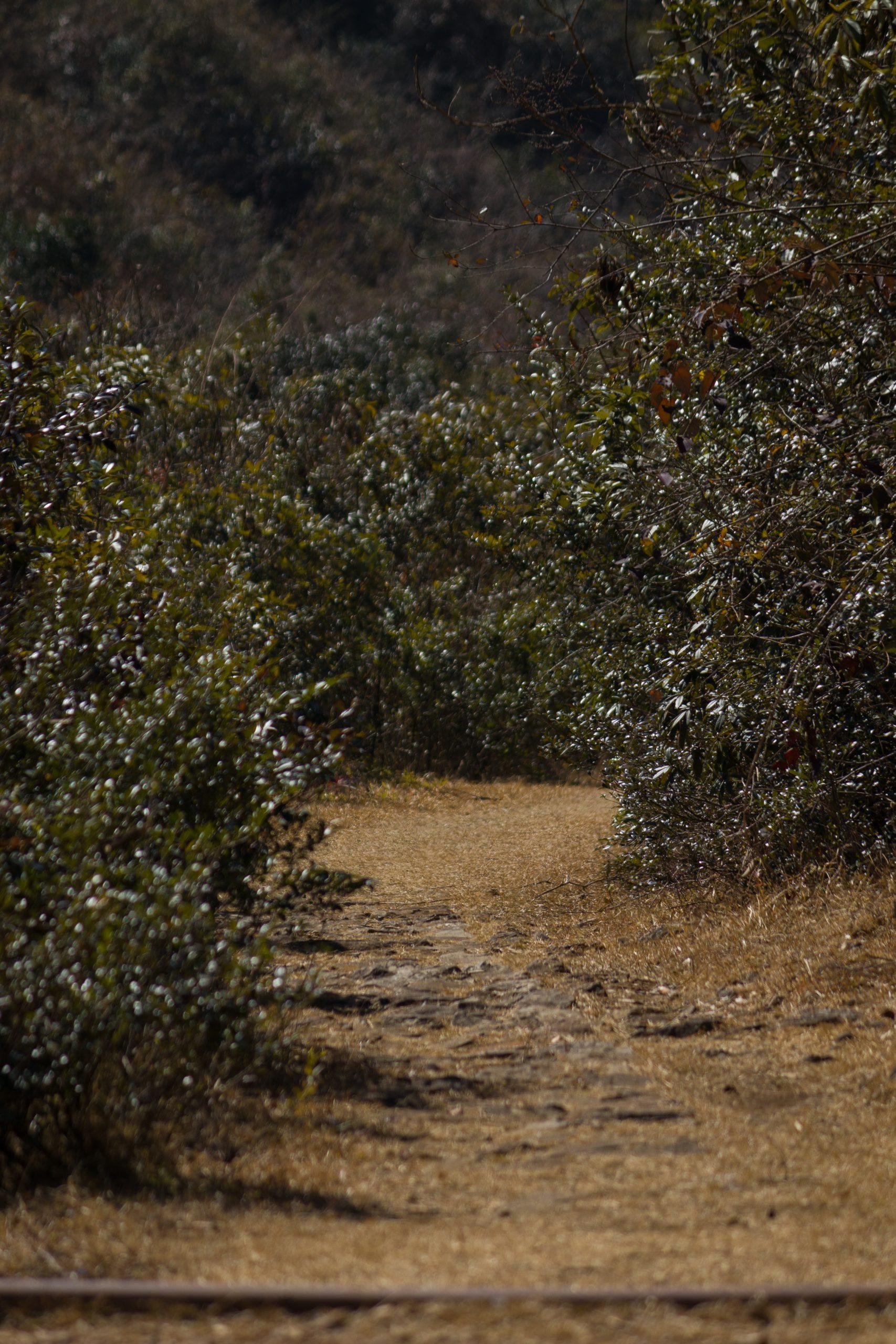 A path through plants