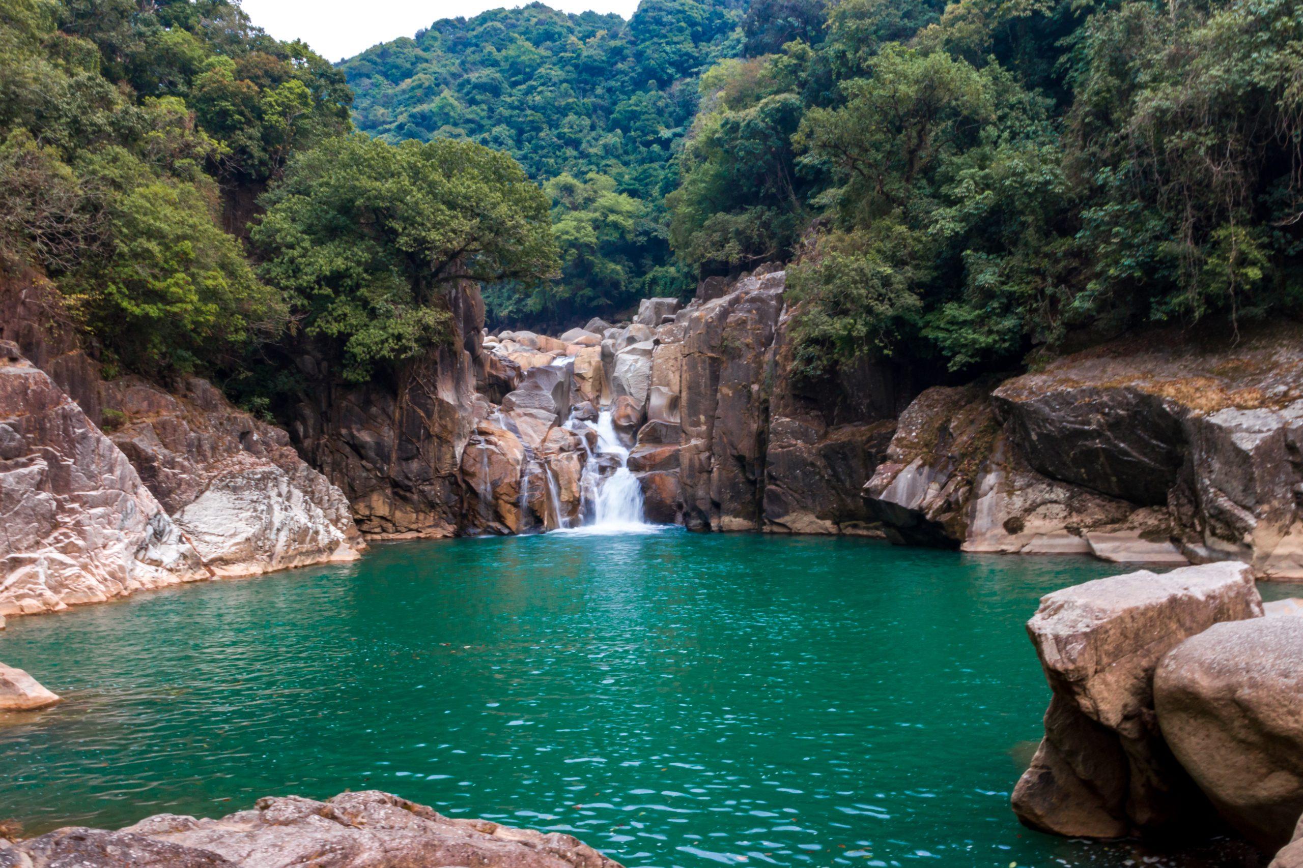 A river in a jungle