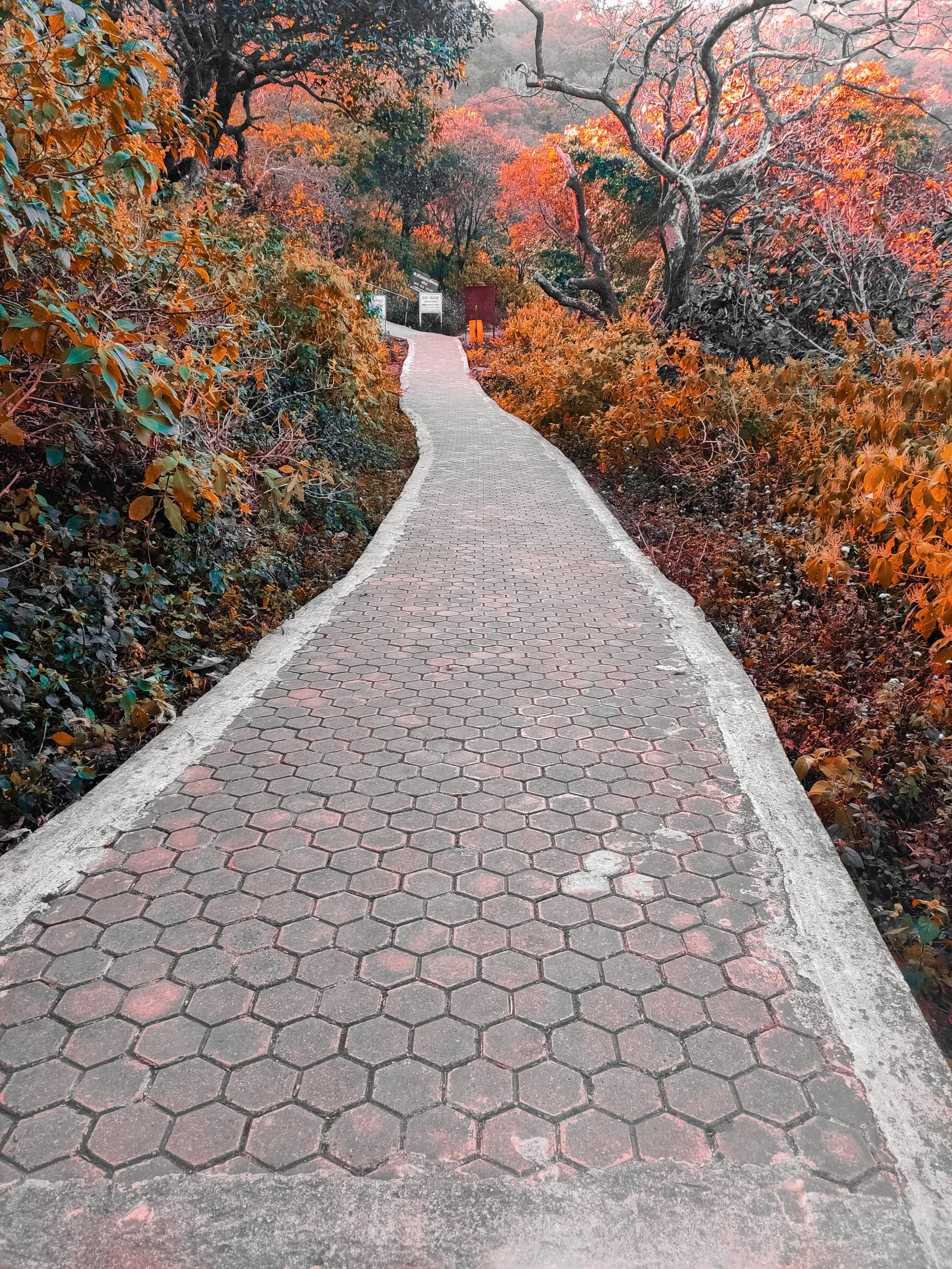 A walkway in a park