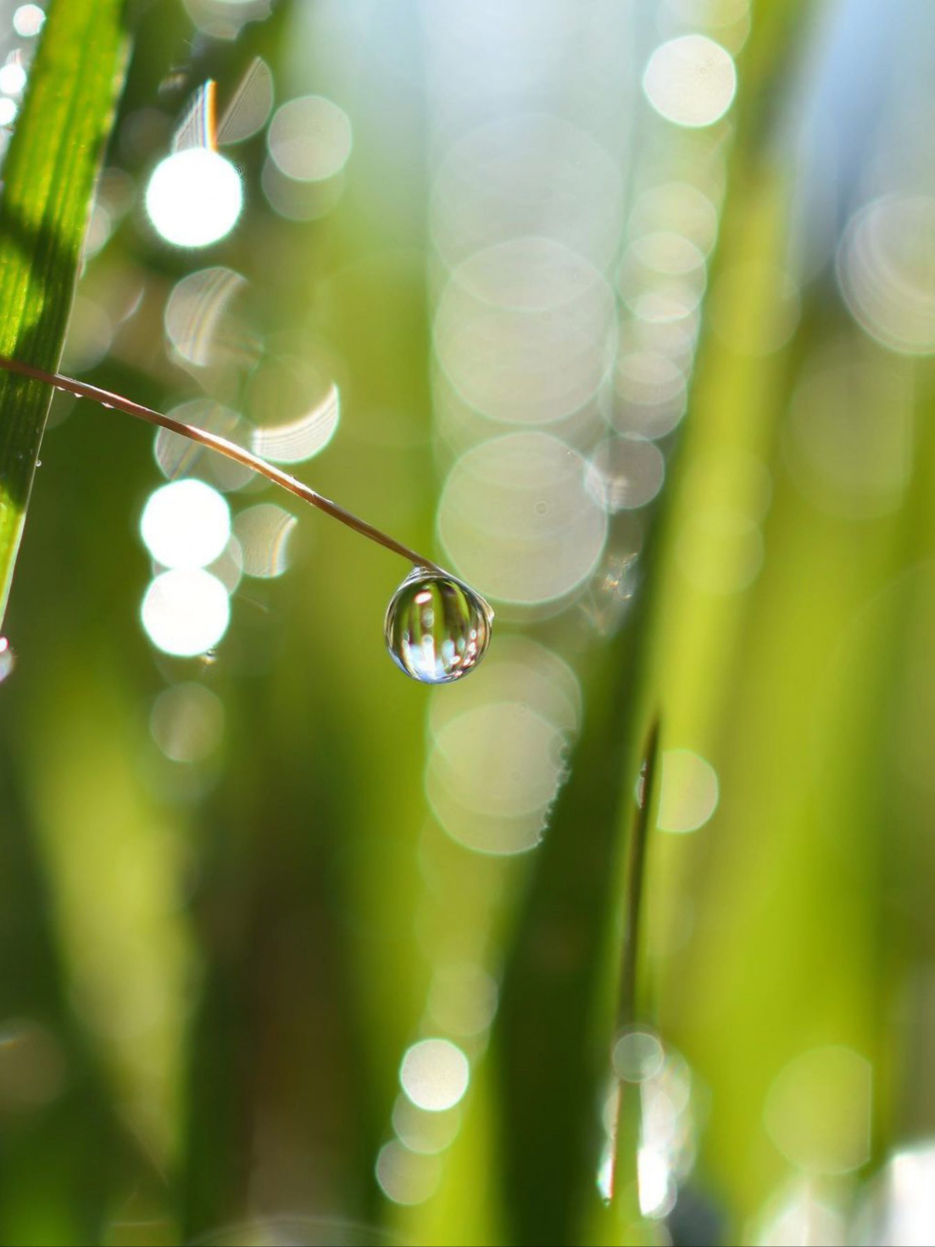 A water drop