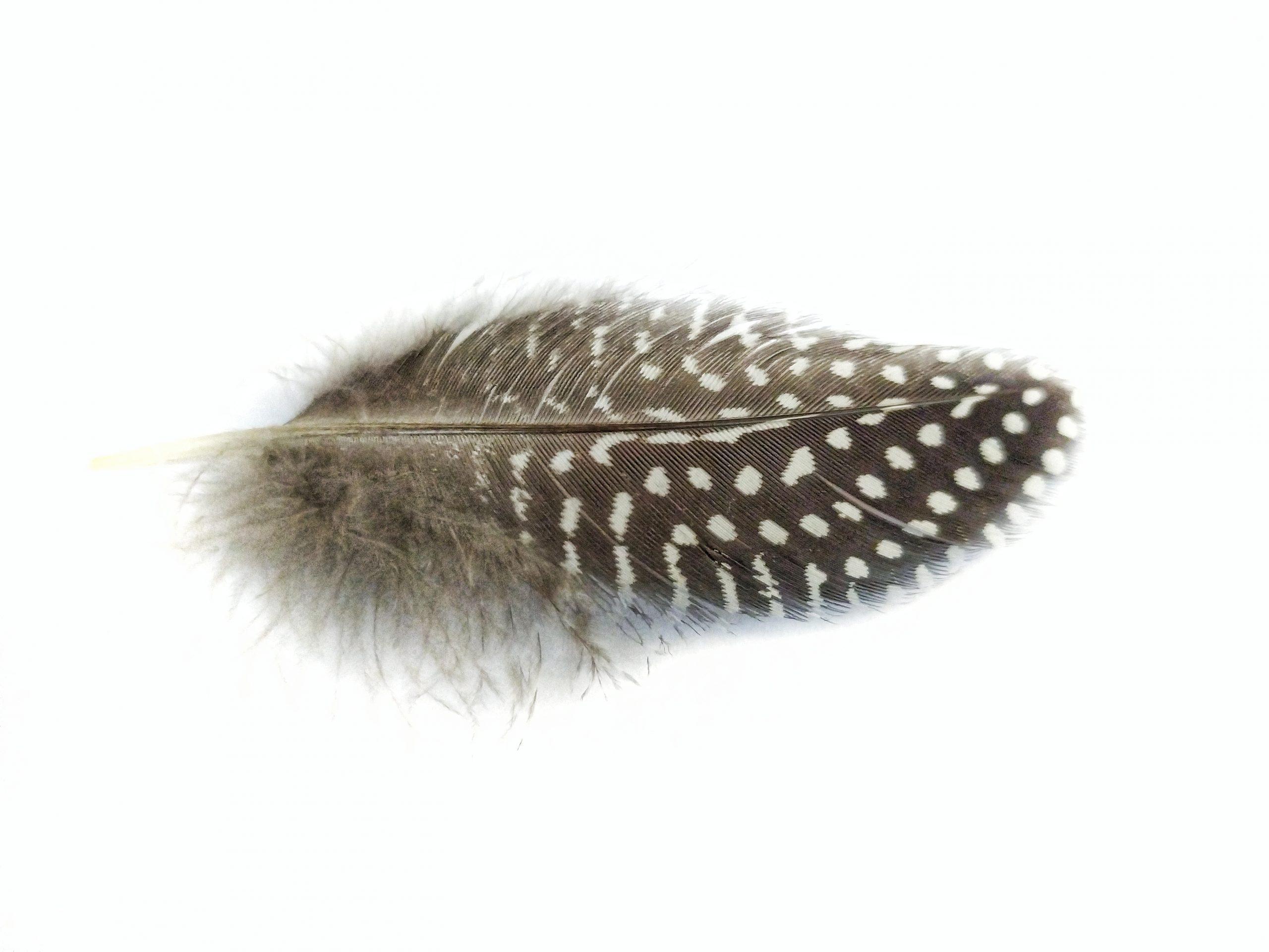 A wing of a bird