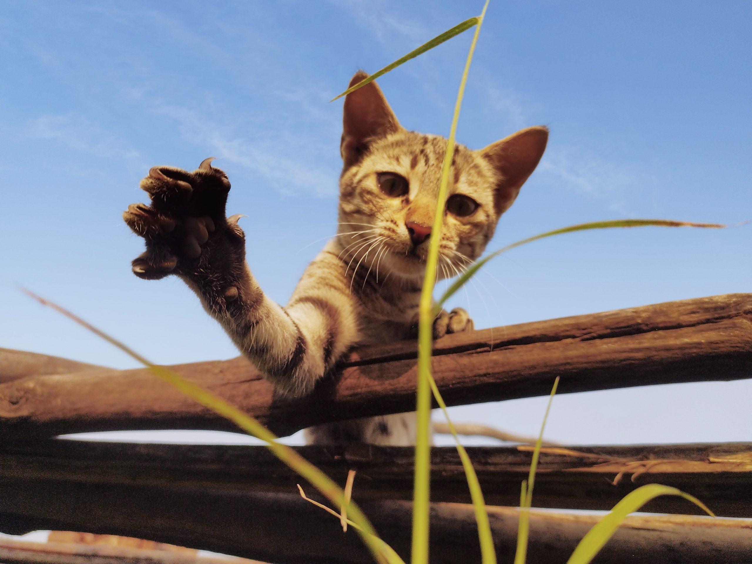Aggressive cat paw