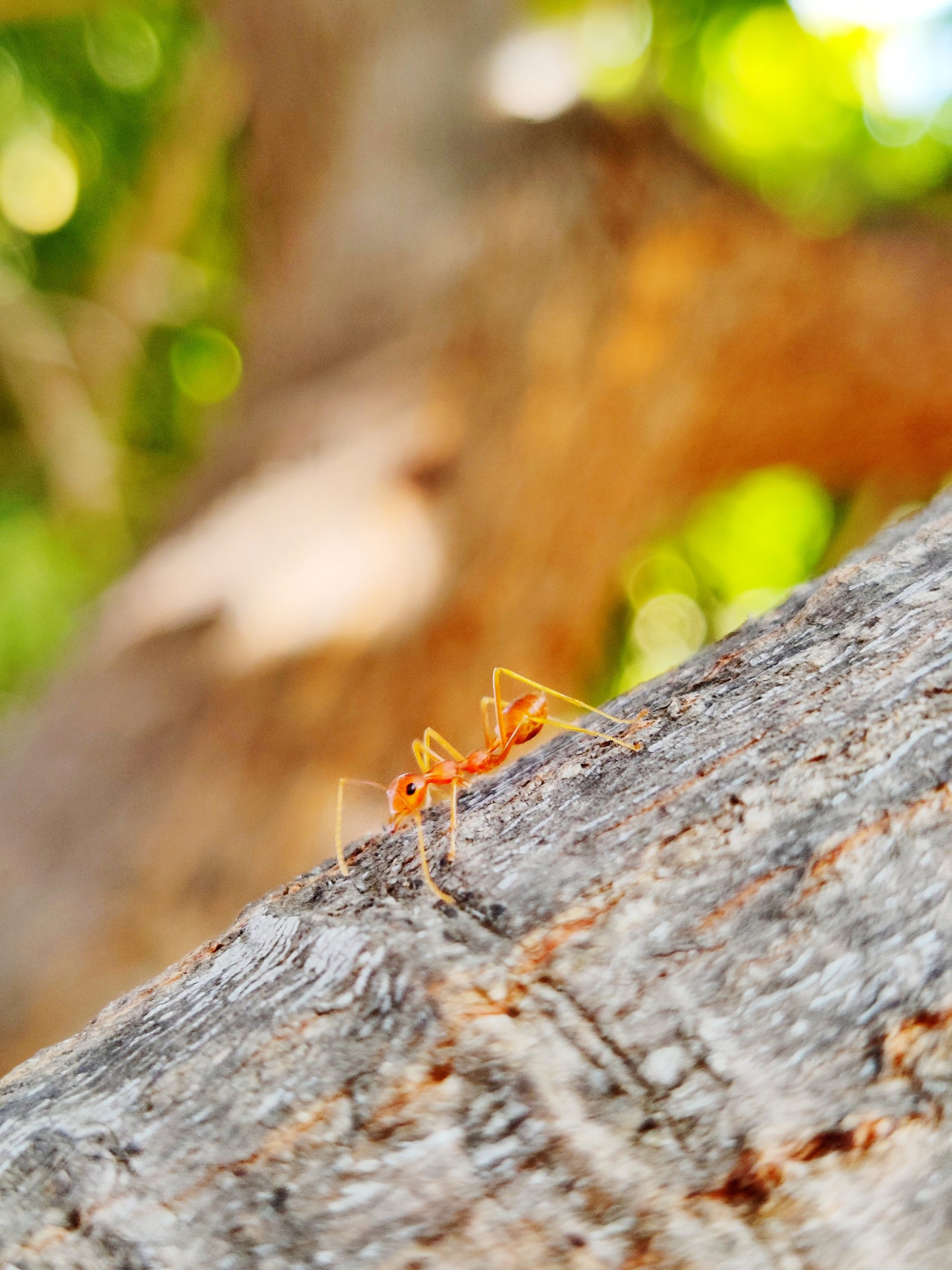 Ant on the tree trunk