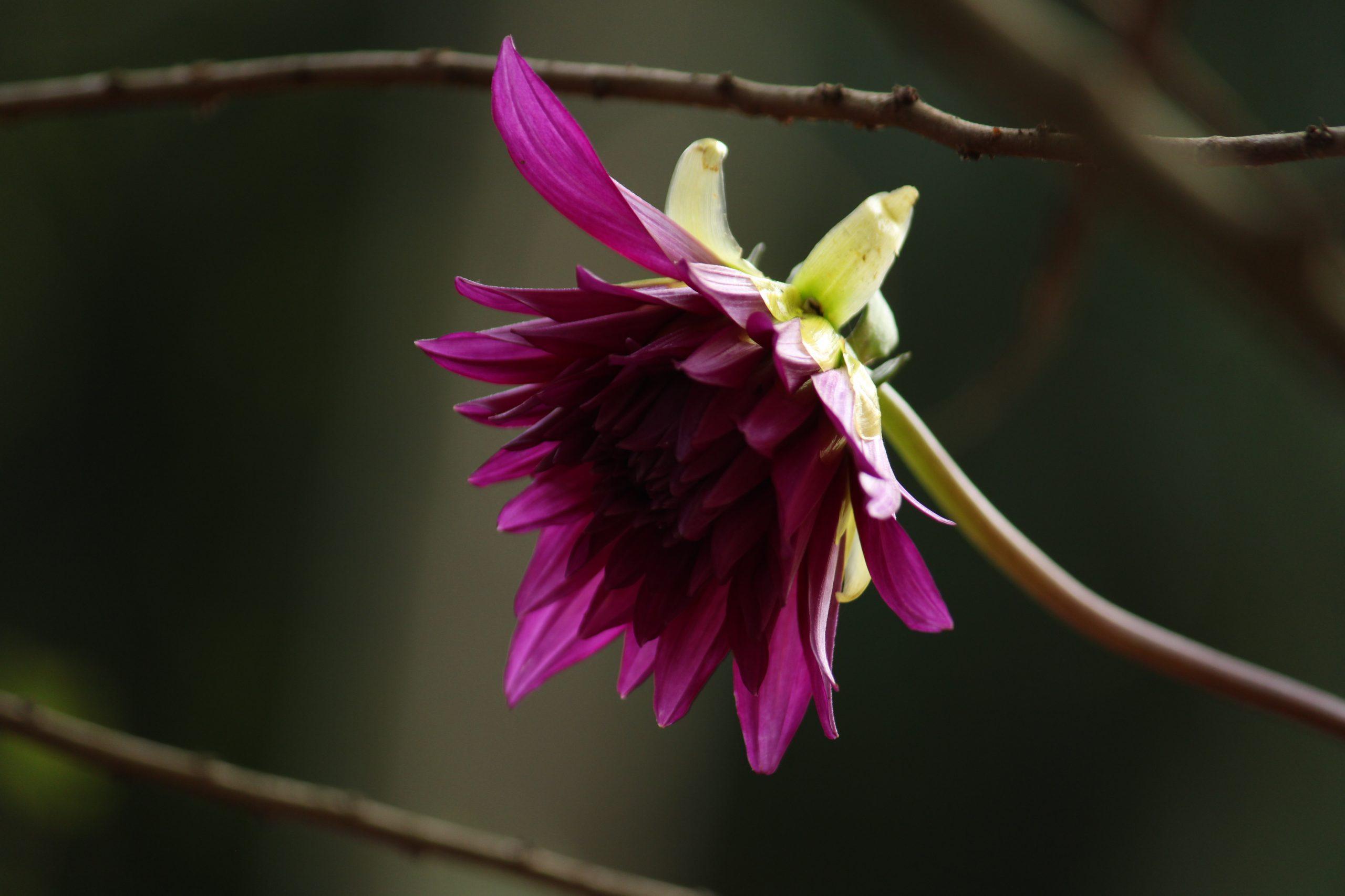 Beautiful purple flower