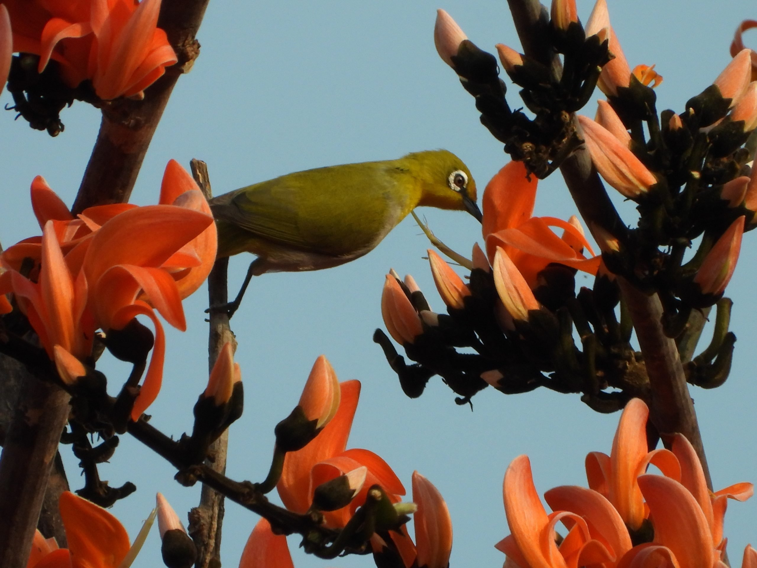 Bird on the flower plant