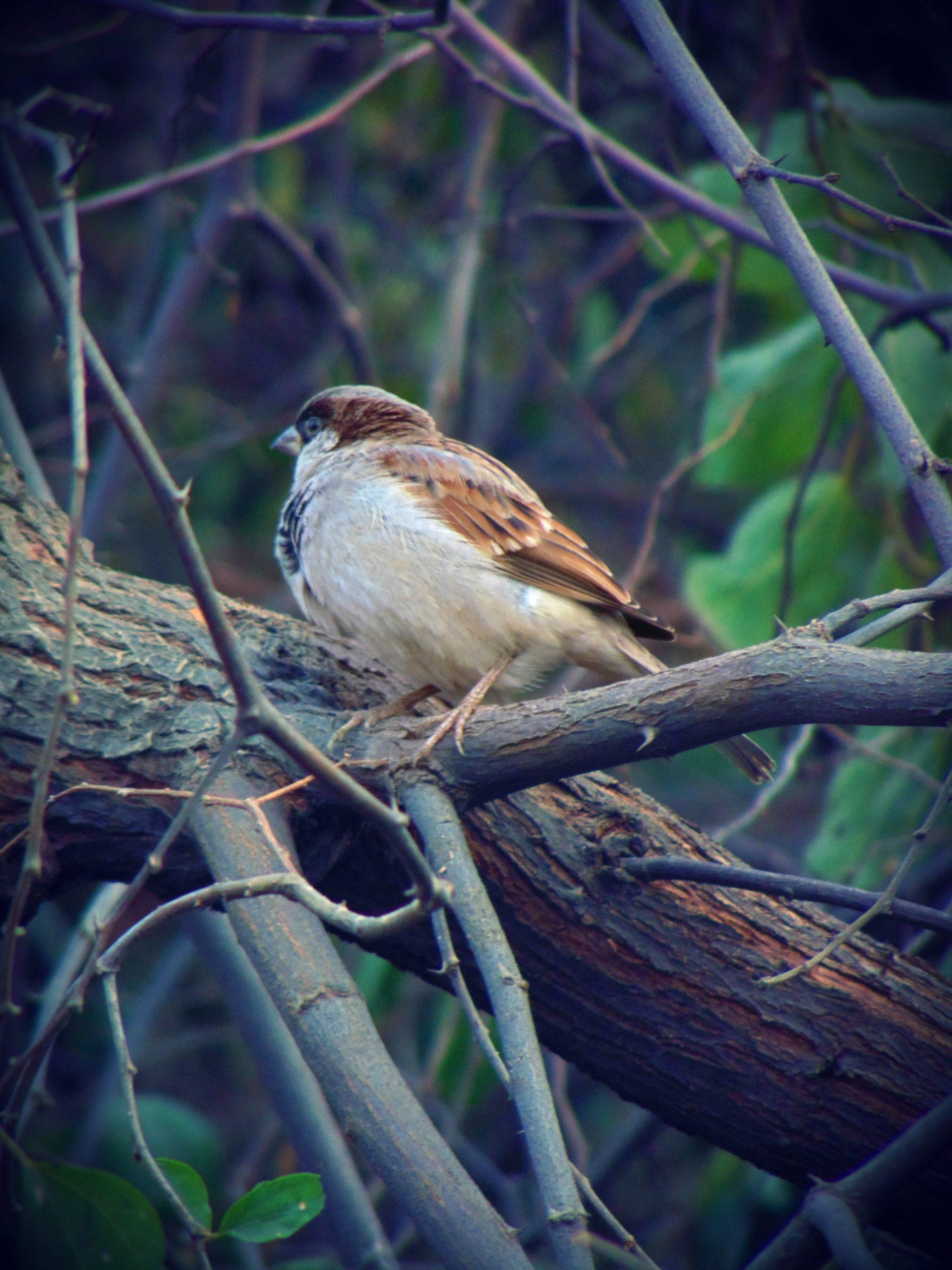 Bird sitting on the tree branch