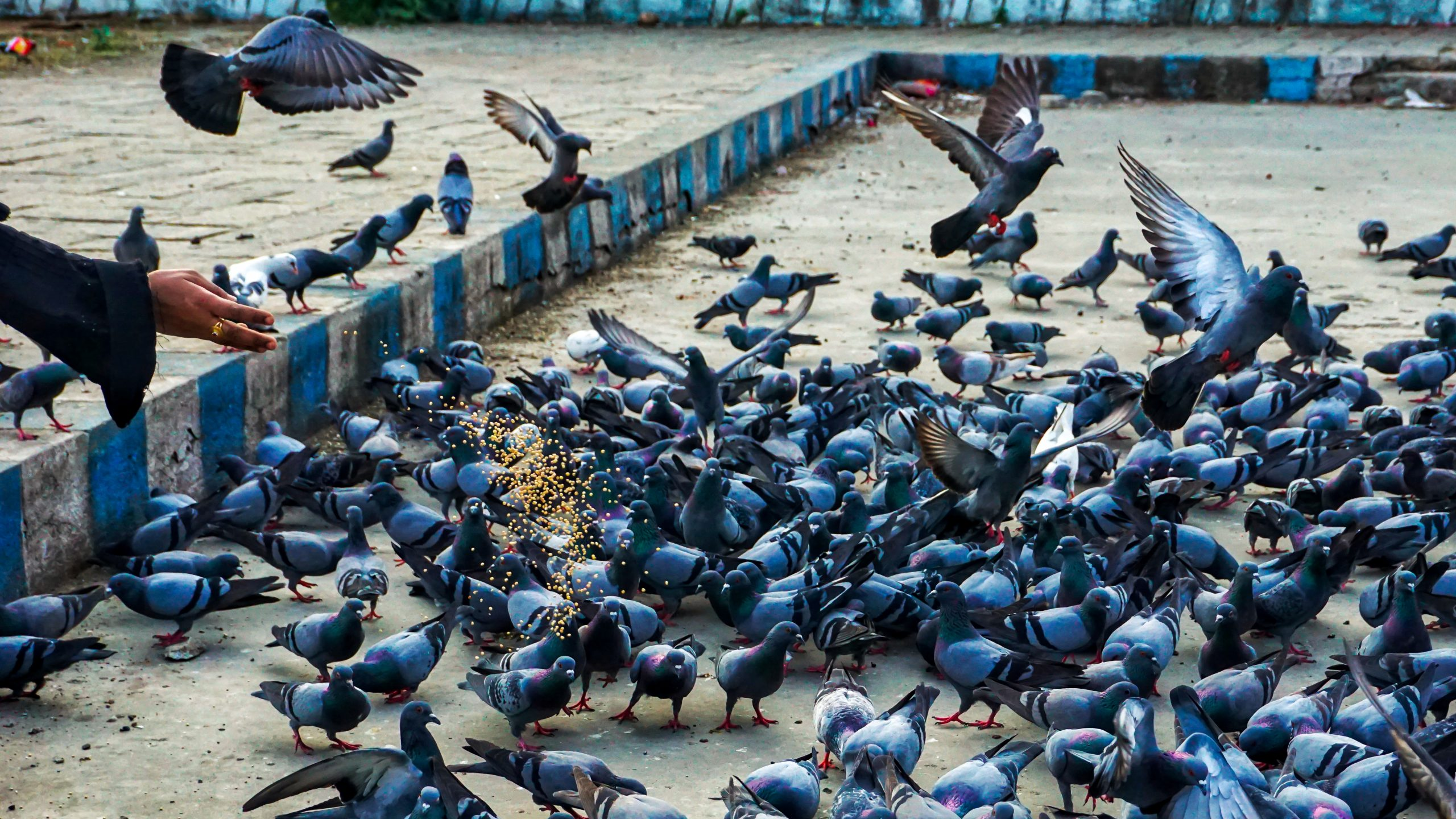 Woman giving food to birds
