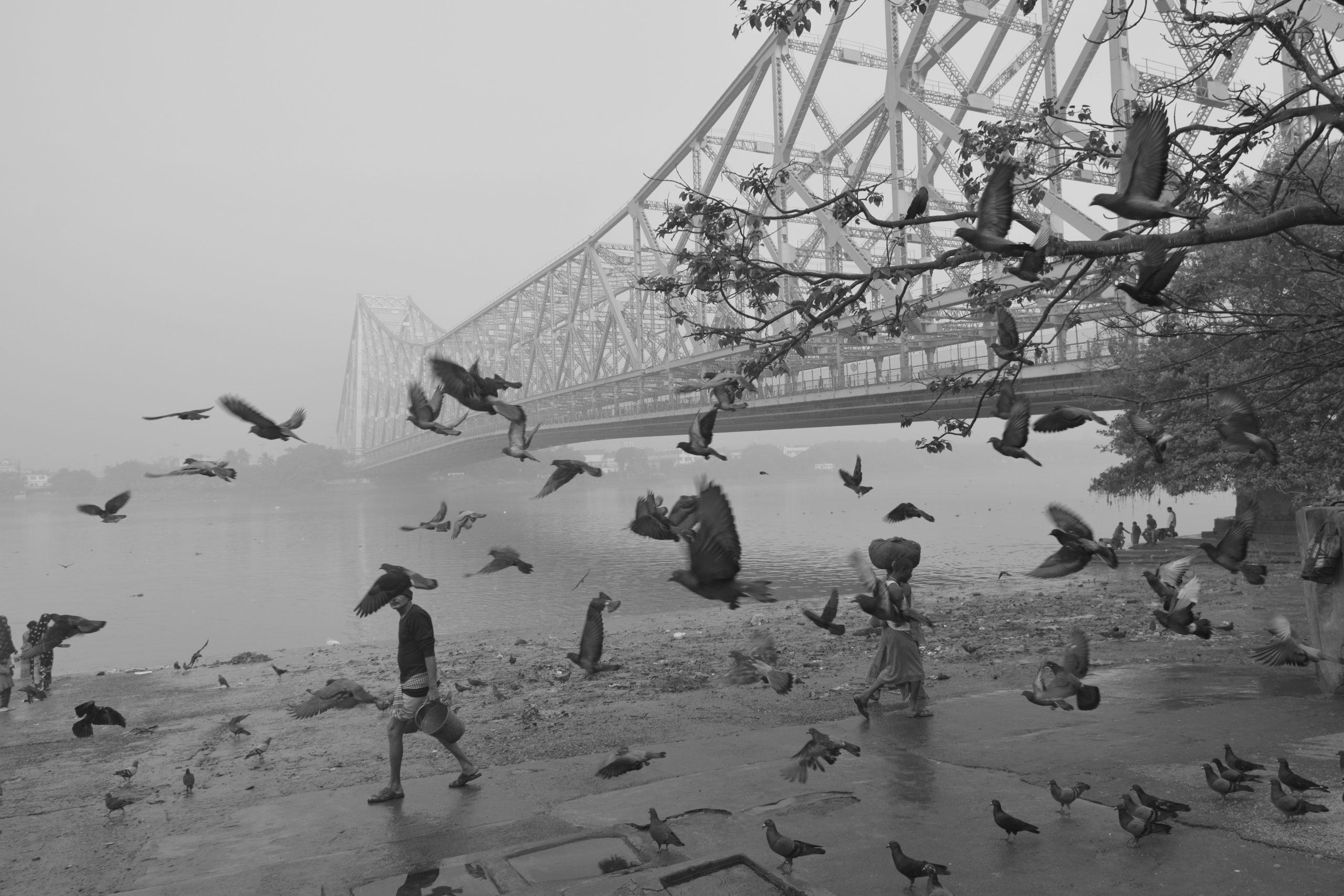 Birds flying near Howrah Bridge