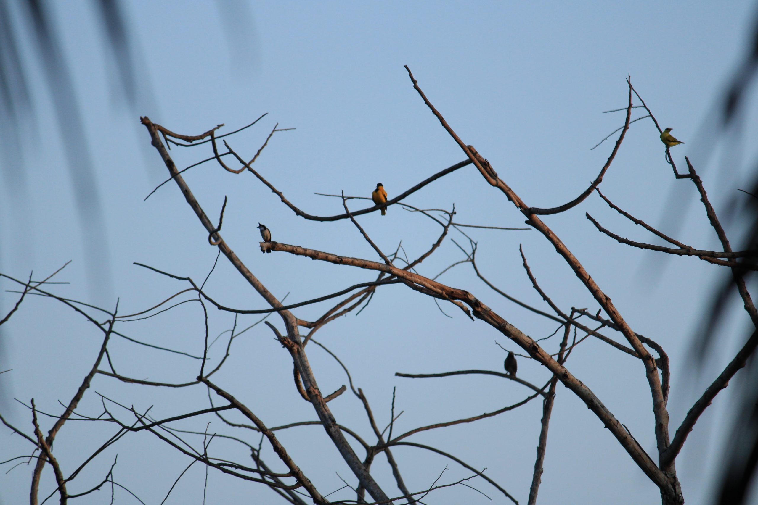 Birds sitting on the tree.