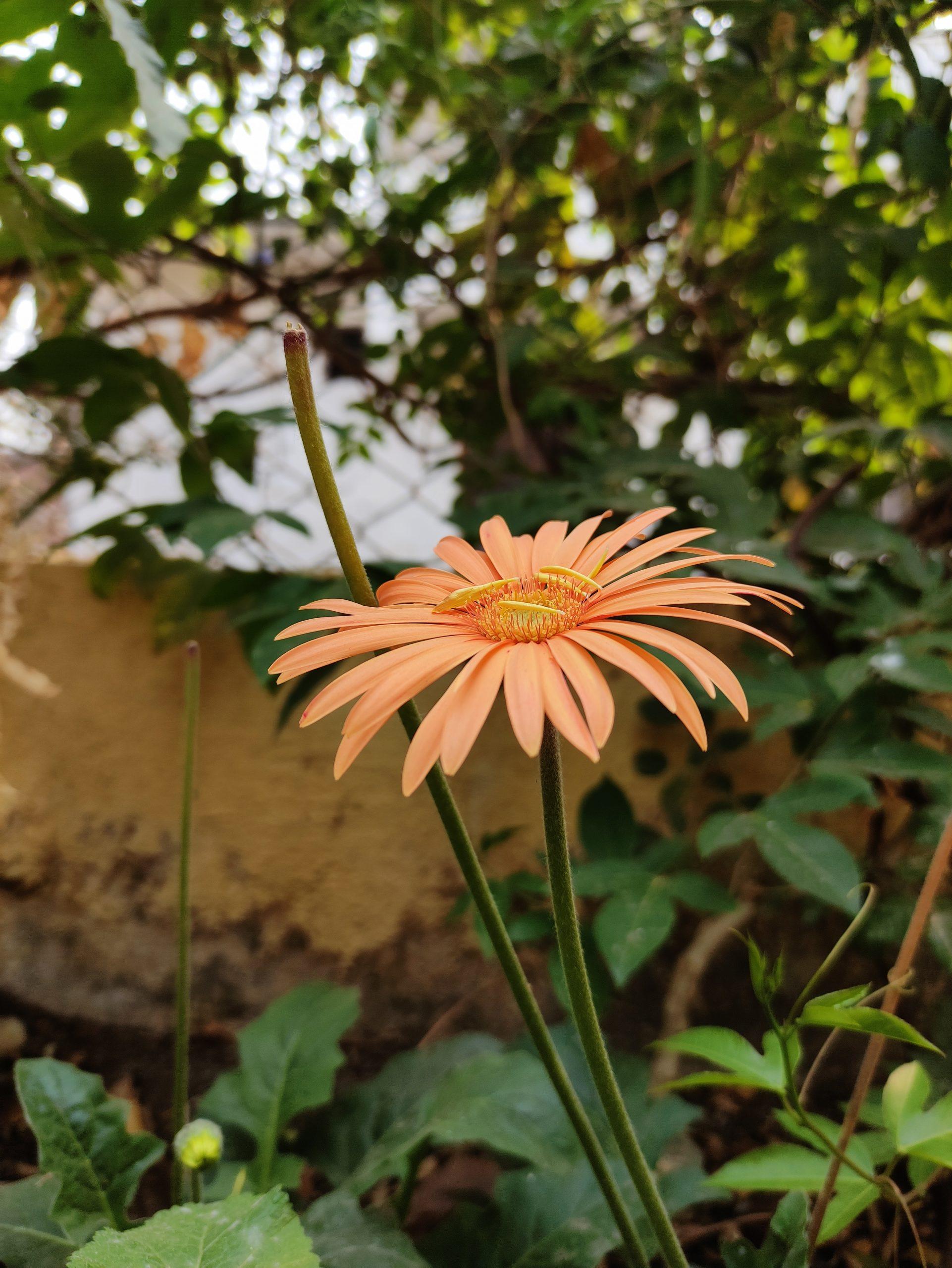 Blooming flower in the garden
