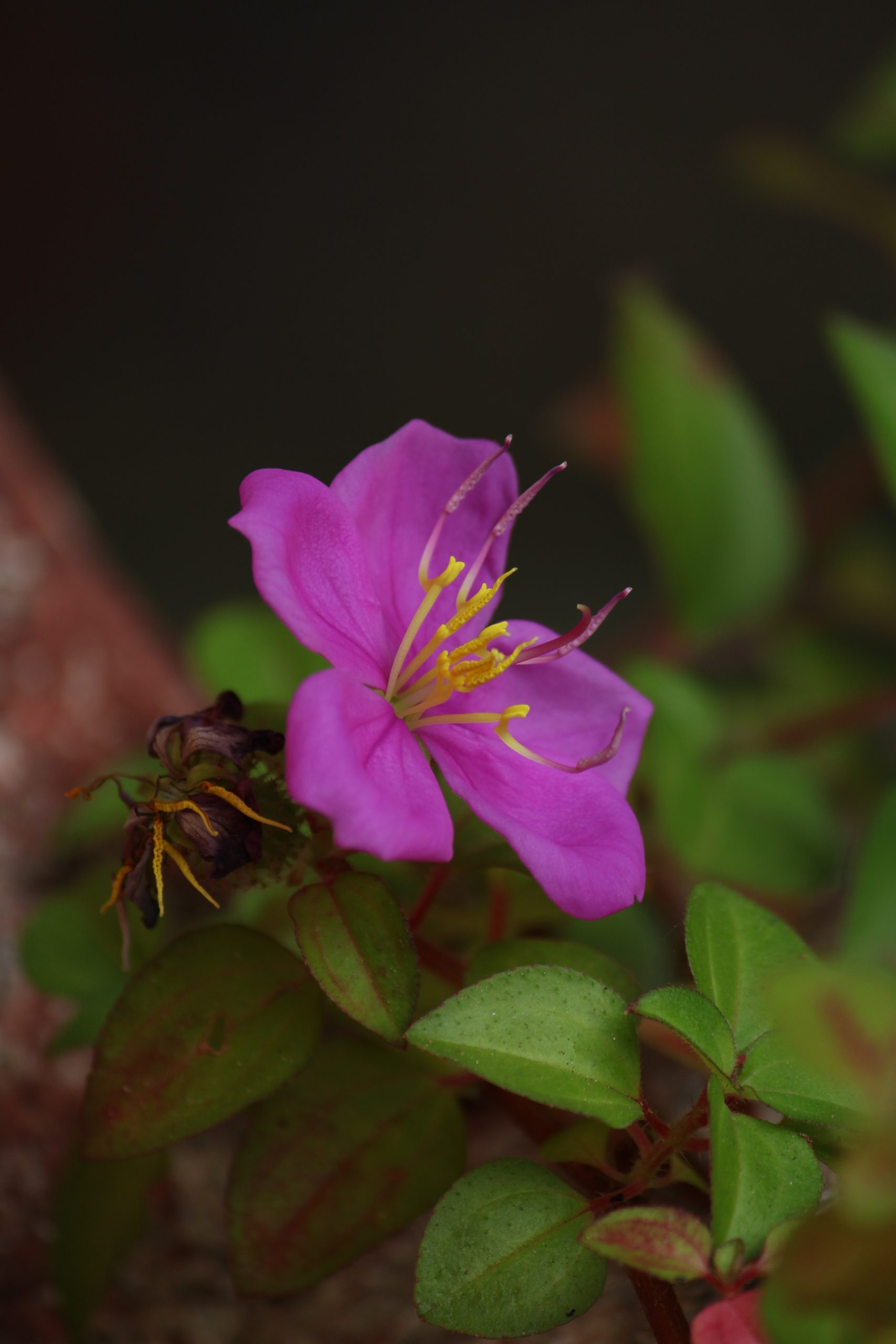 Blooming flower on plant