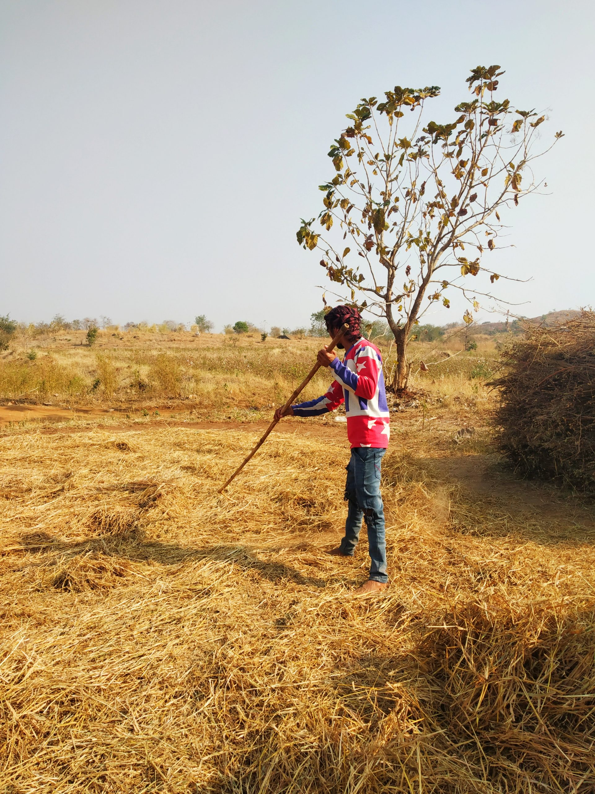 Boy working in the farm