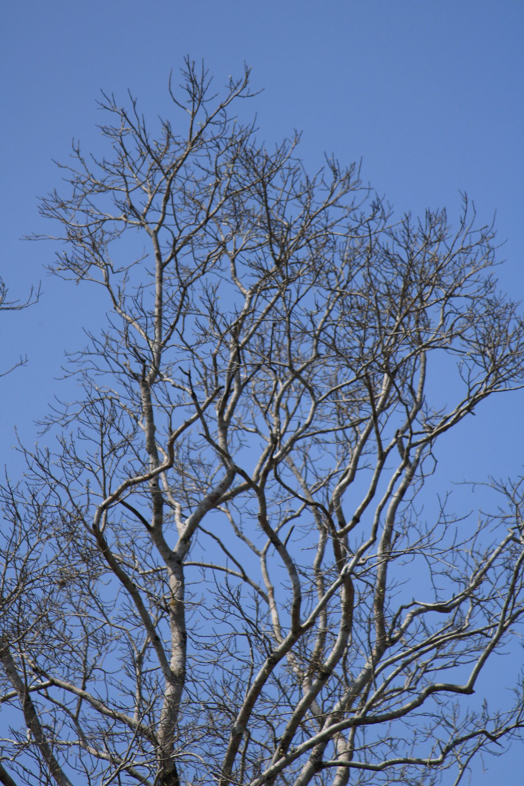 Branches of a dry tree