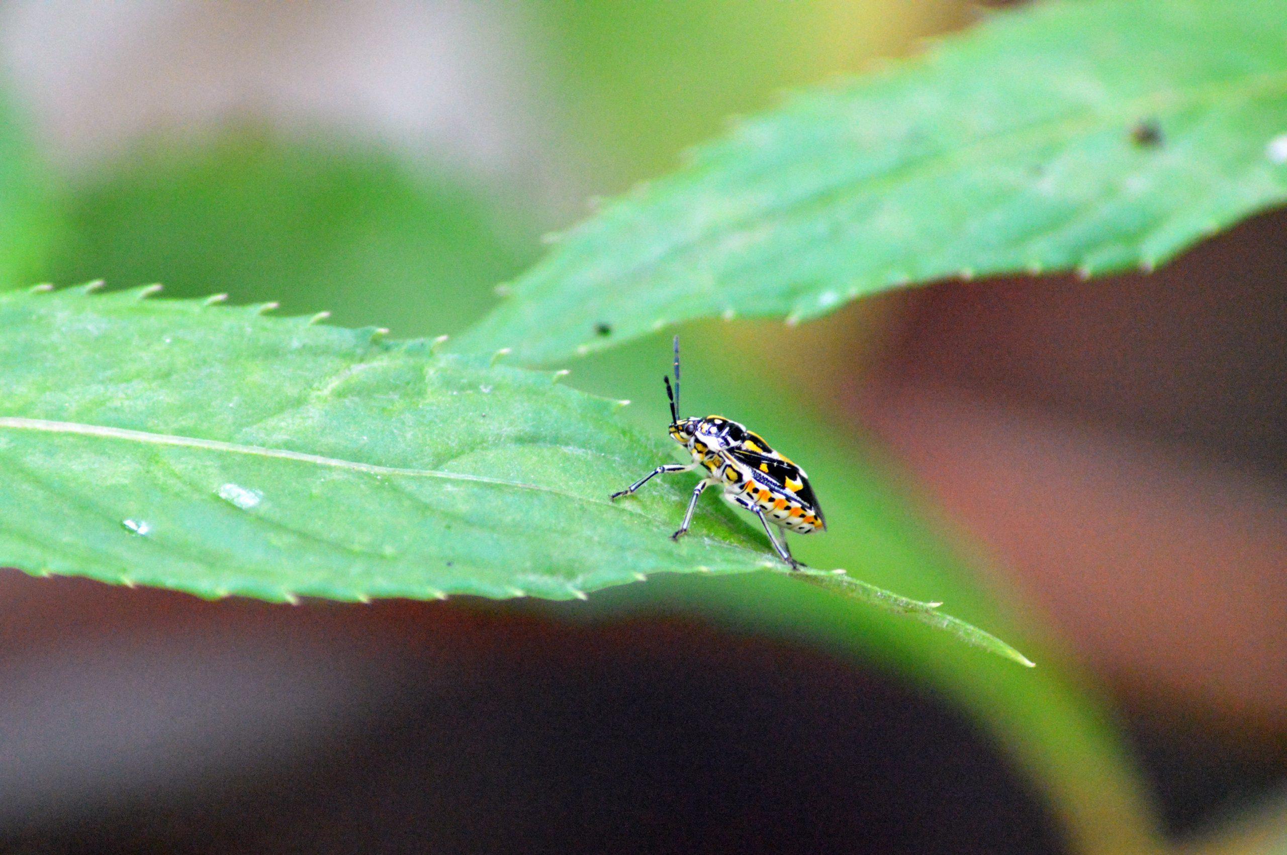 Bug on plant leaf