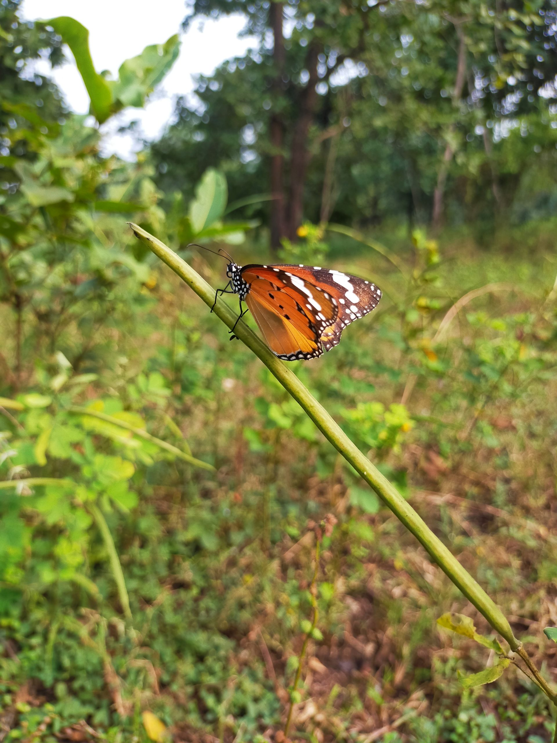 Butterfly on plant stem